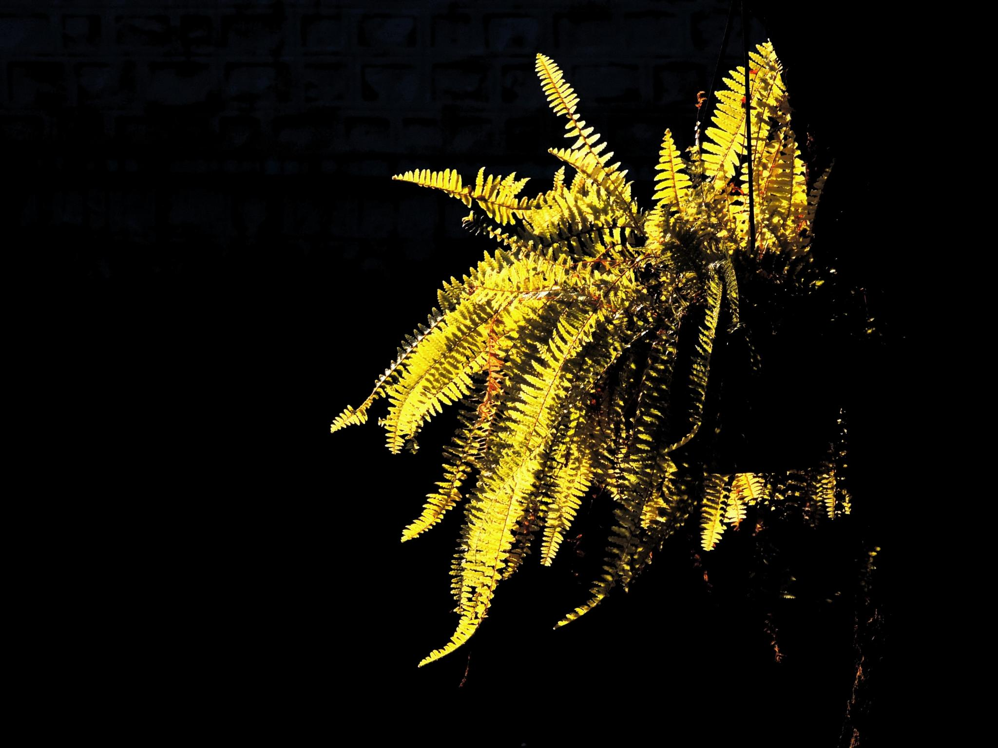 a sun soaked fern by sunishchalananda