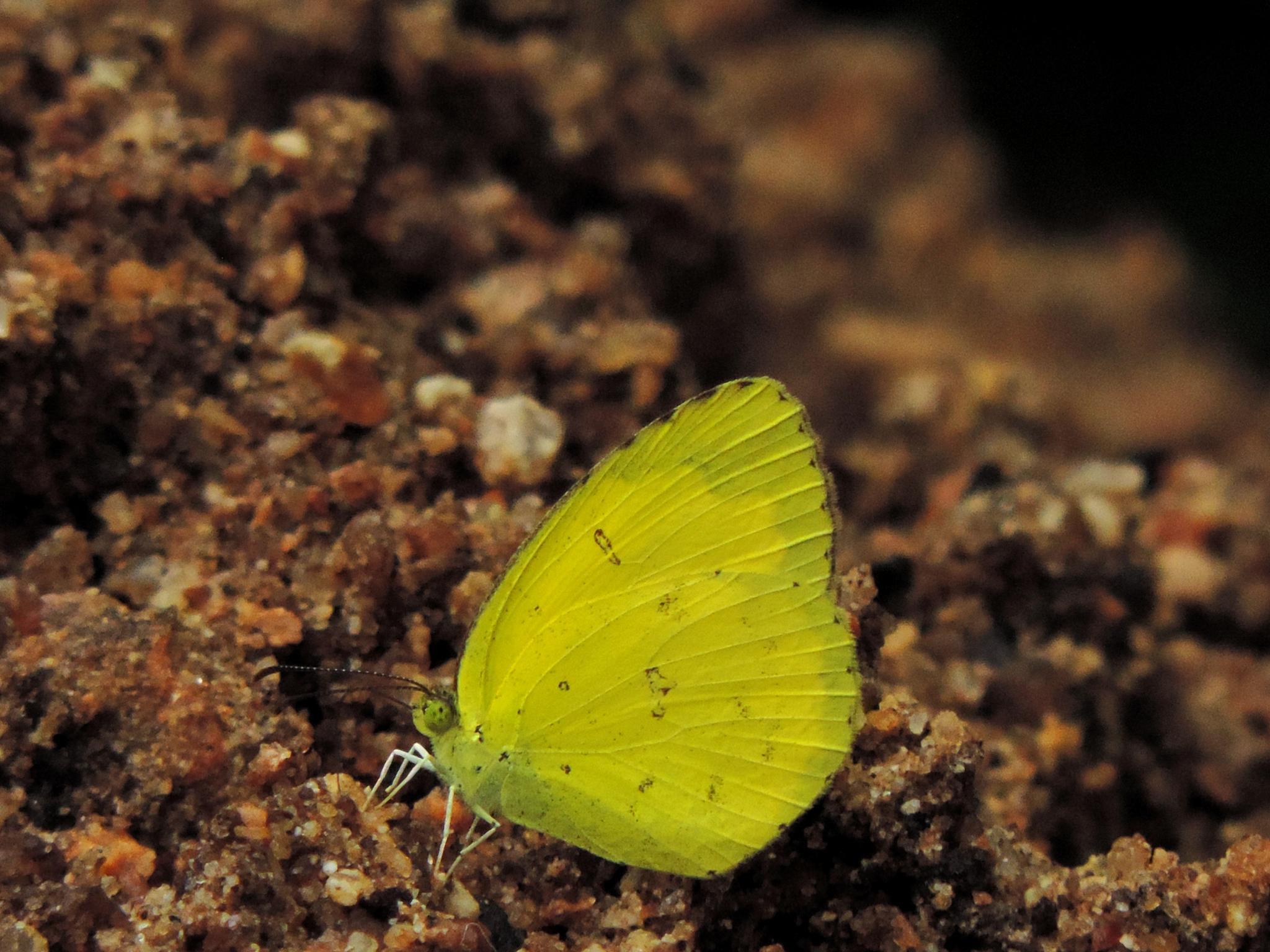 butterfly 10 by sunishchalananda