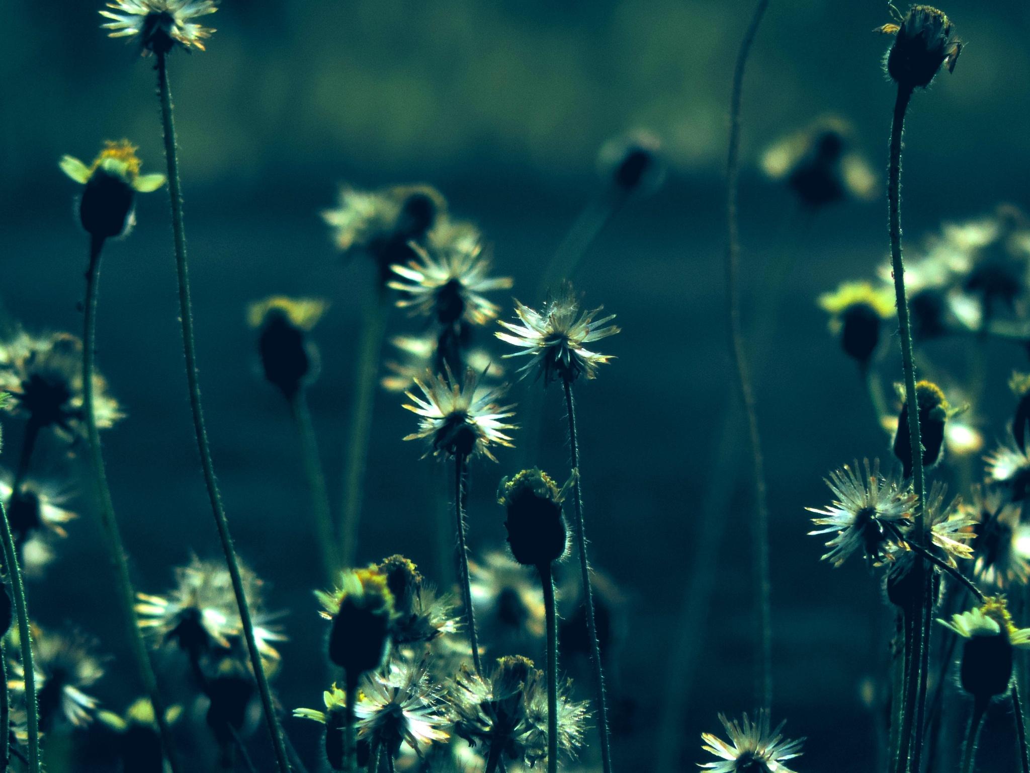 meadows 3 by sunishchalananda