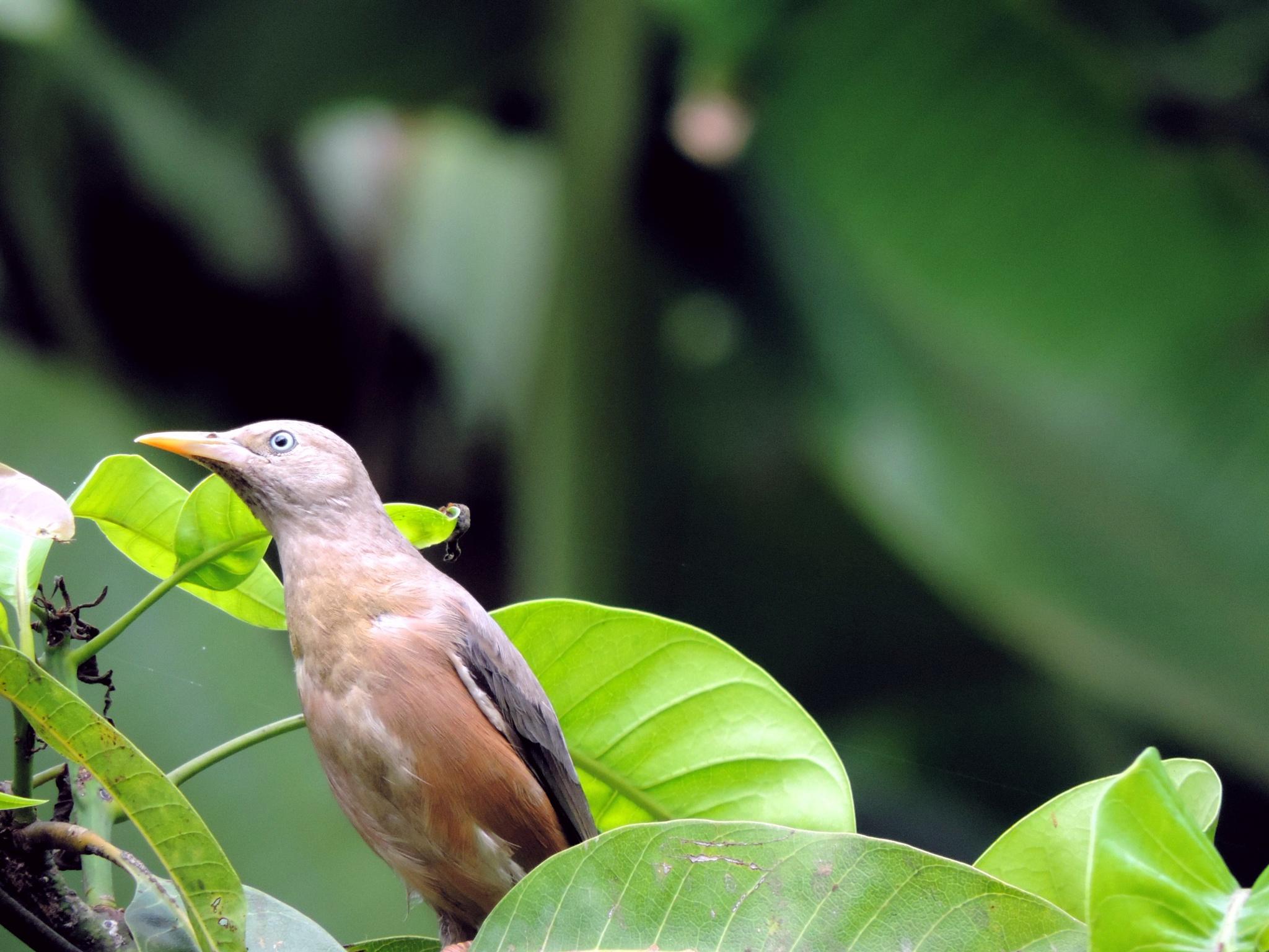 babler by sunishchalananda