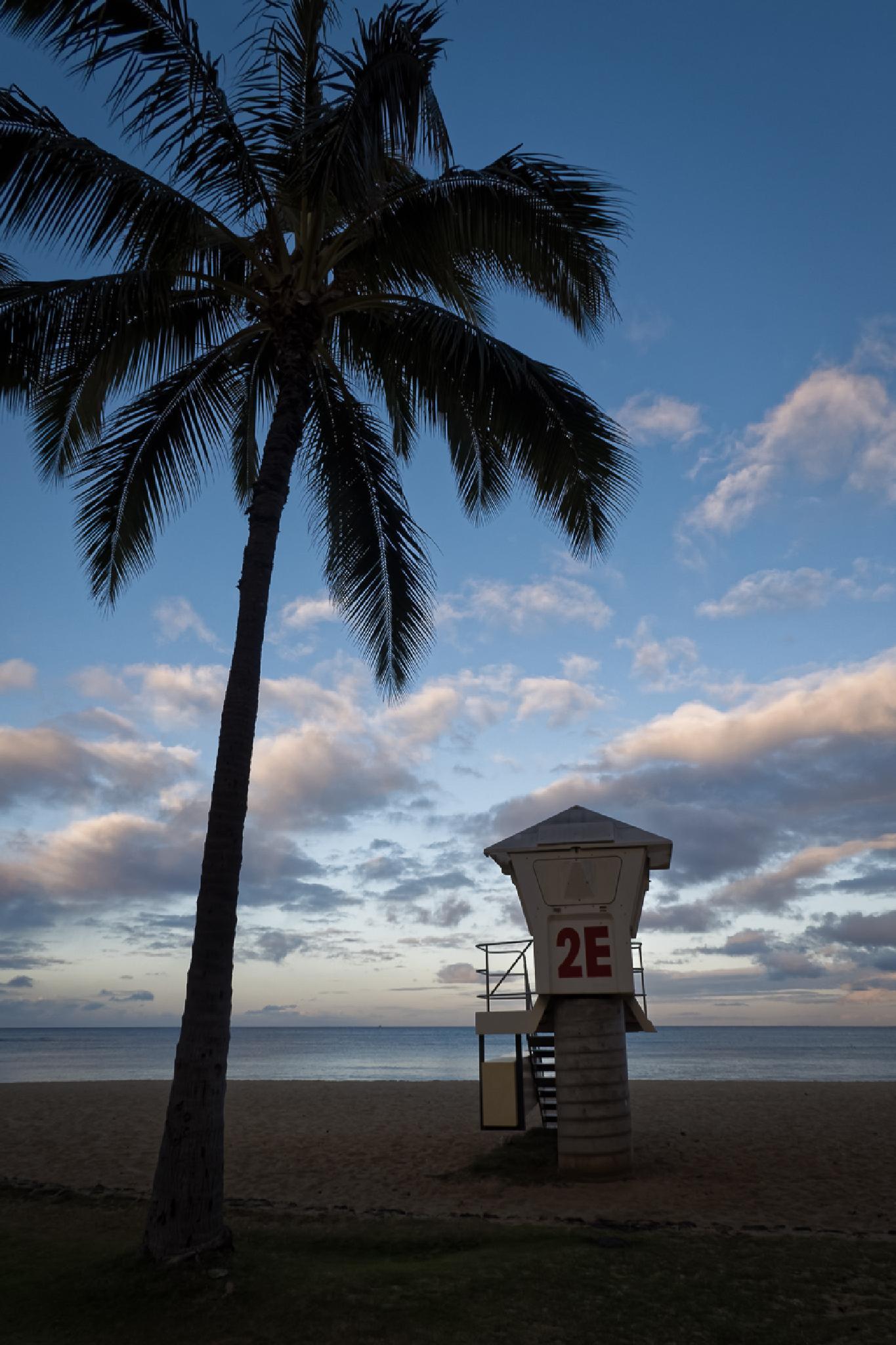 2E and a Palm Tree by Ho John Lee
