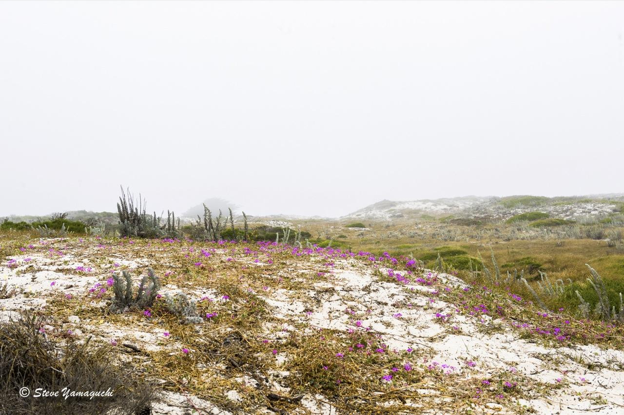 Sand Dunes in the fog  by yamaguchisteve3