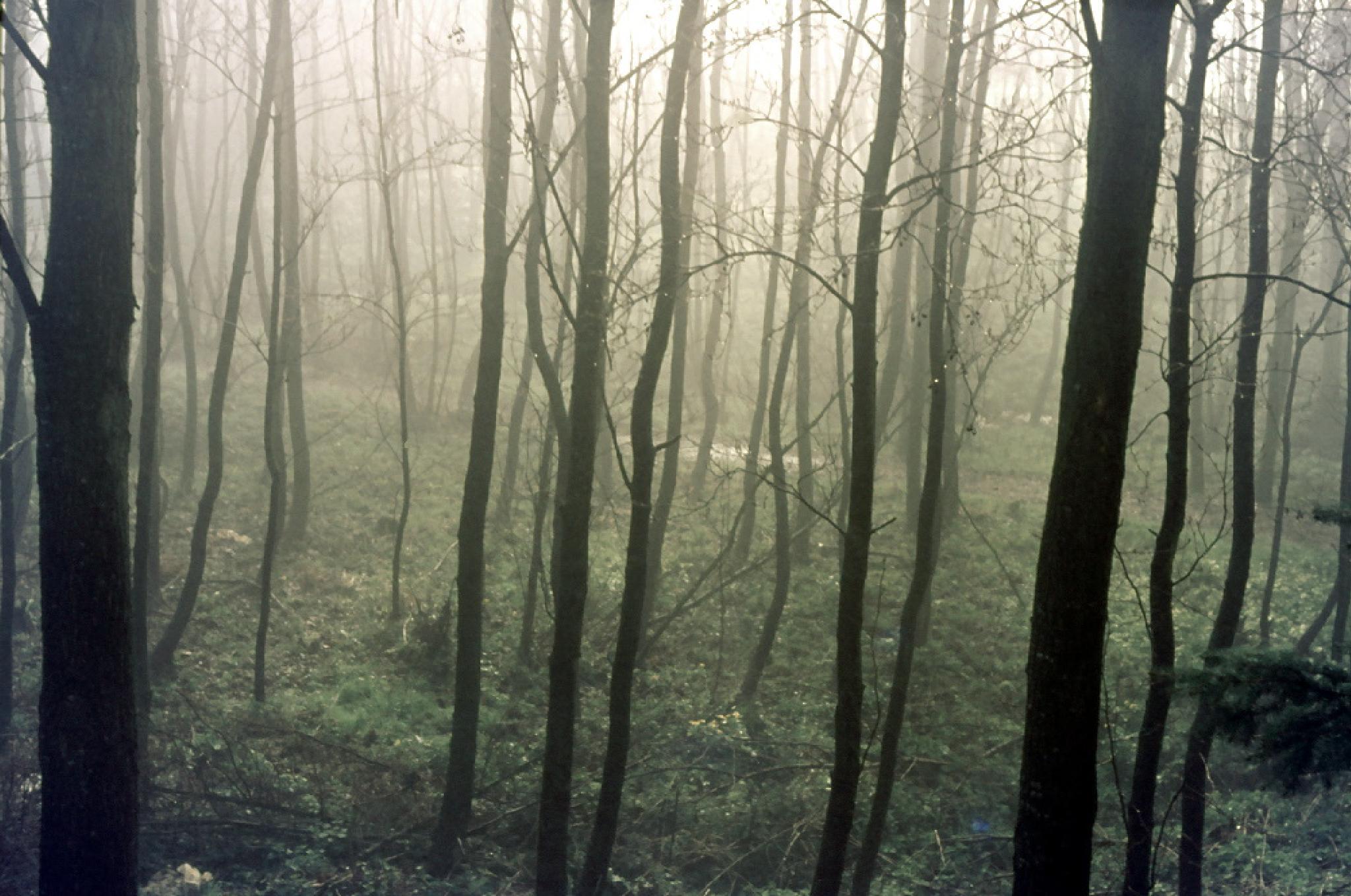 forest on a misty November morning by mapetermayer