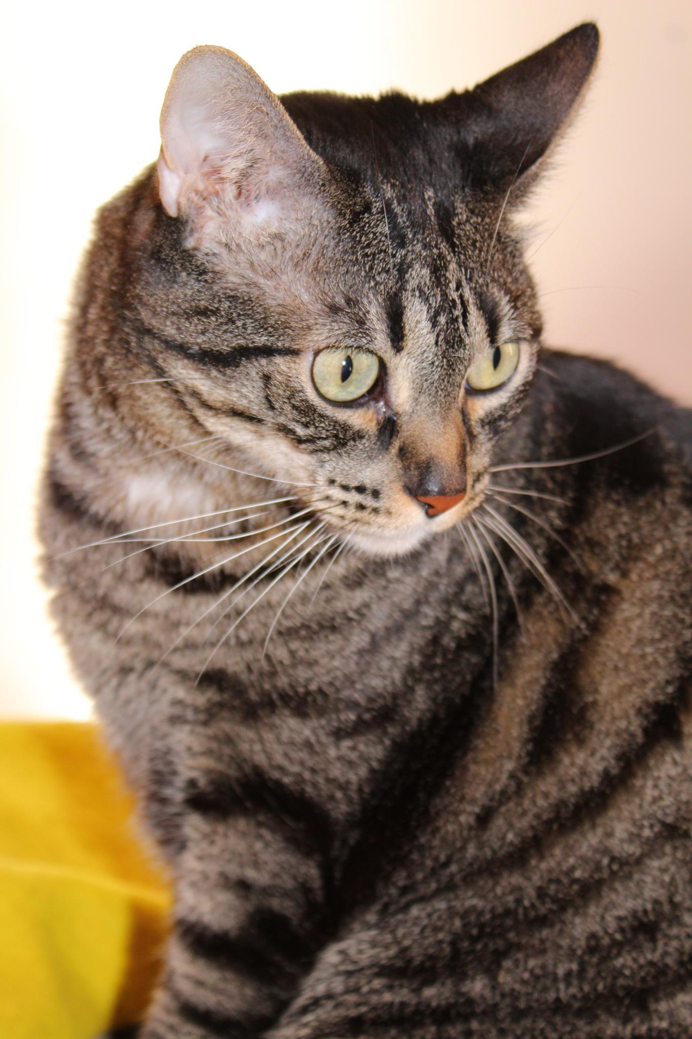 Cat by Cristina R