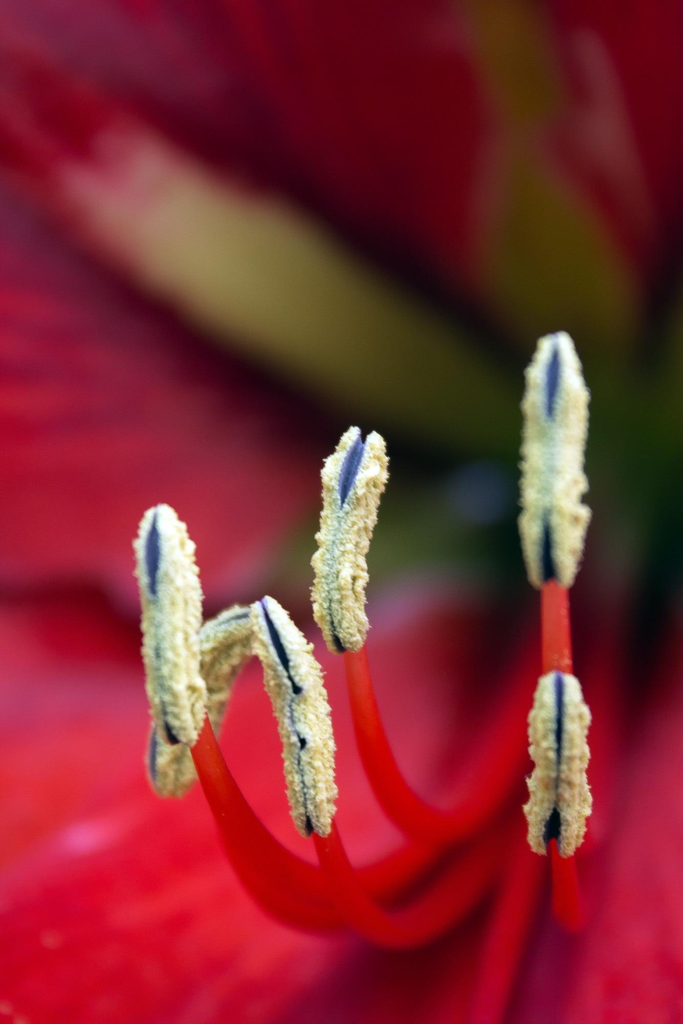 flor by Gerardo Torres