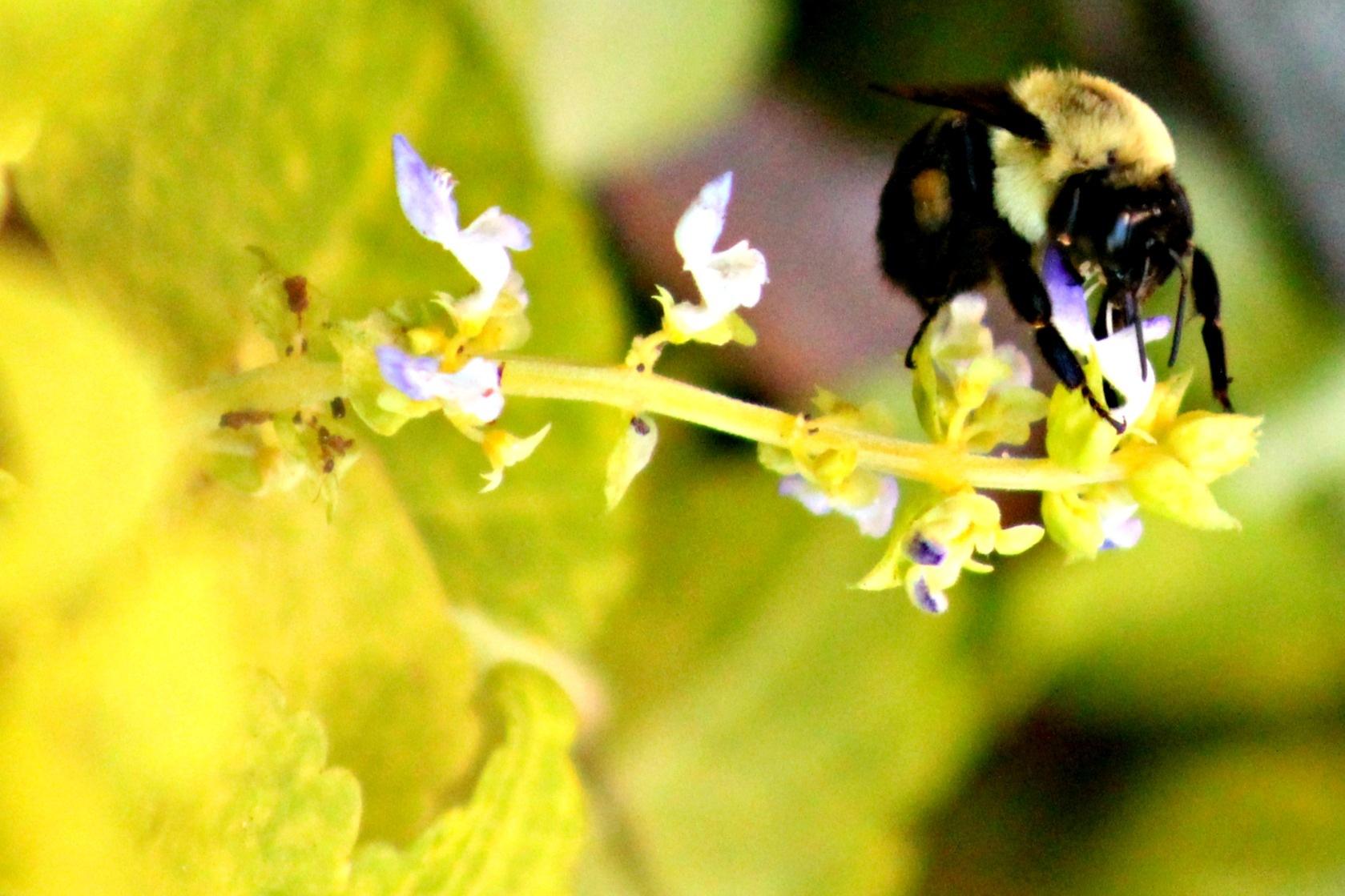 Bee Good by thelovewalkinternationalminist