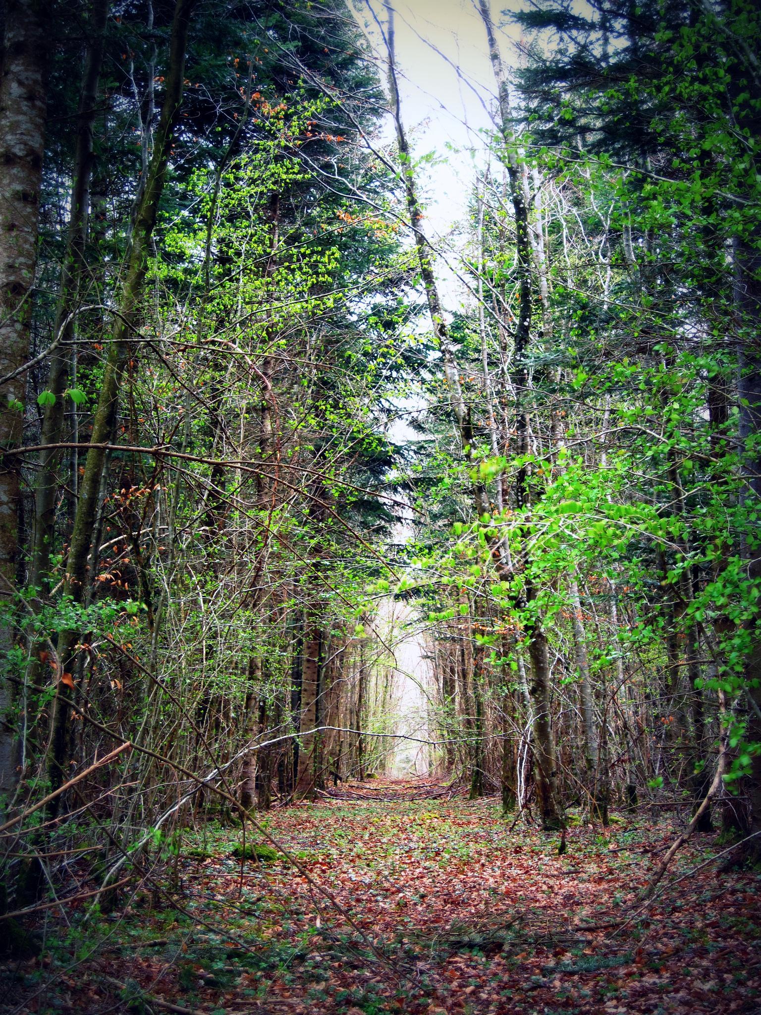forest trail by EmmDublin