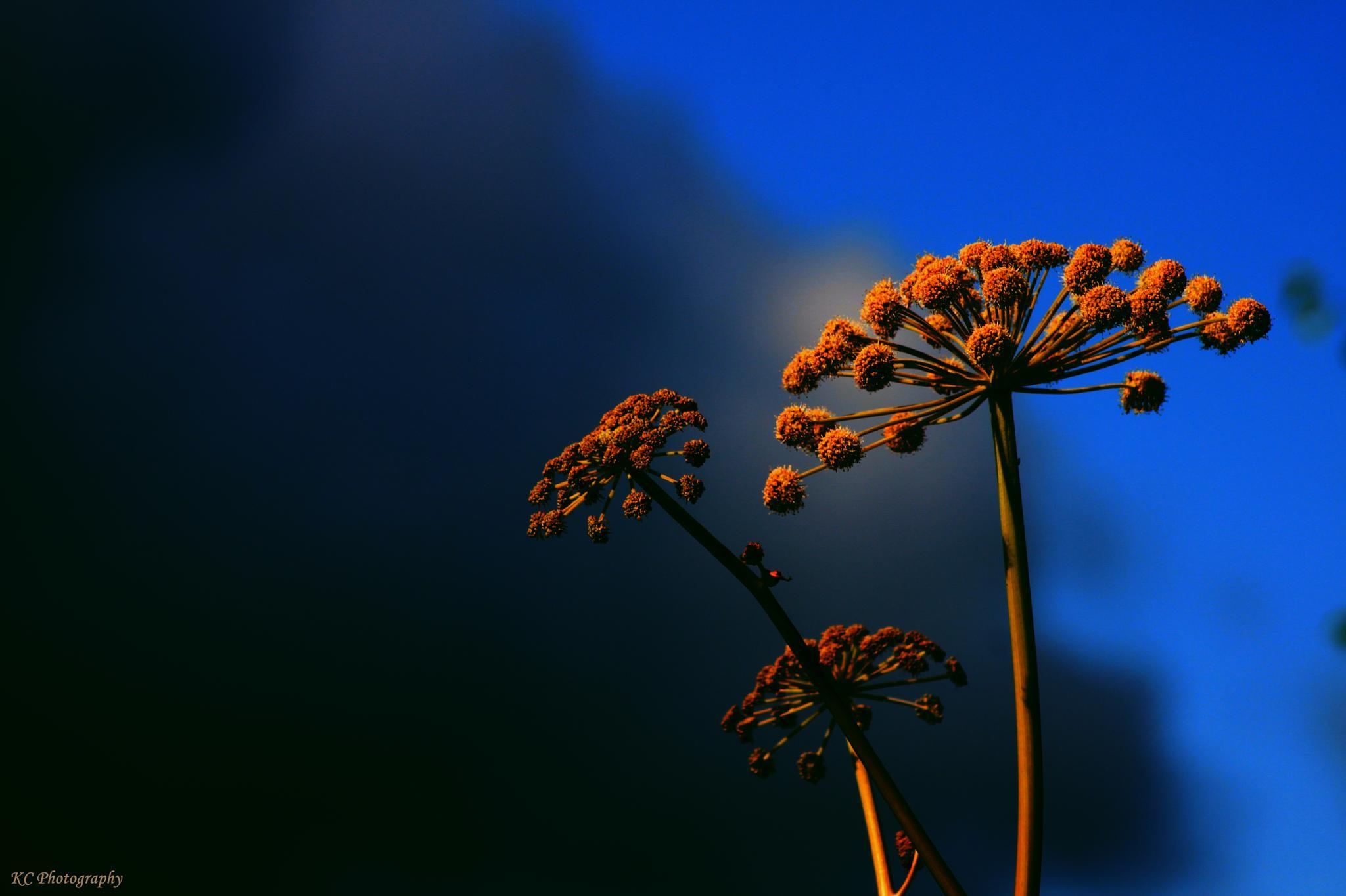 Photo in Nature #sun #sky #clouds #nature #macro