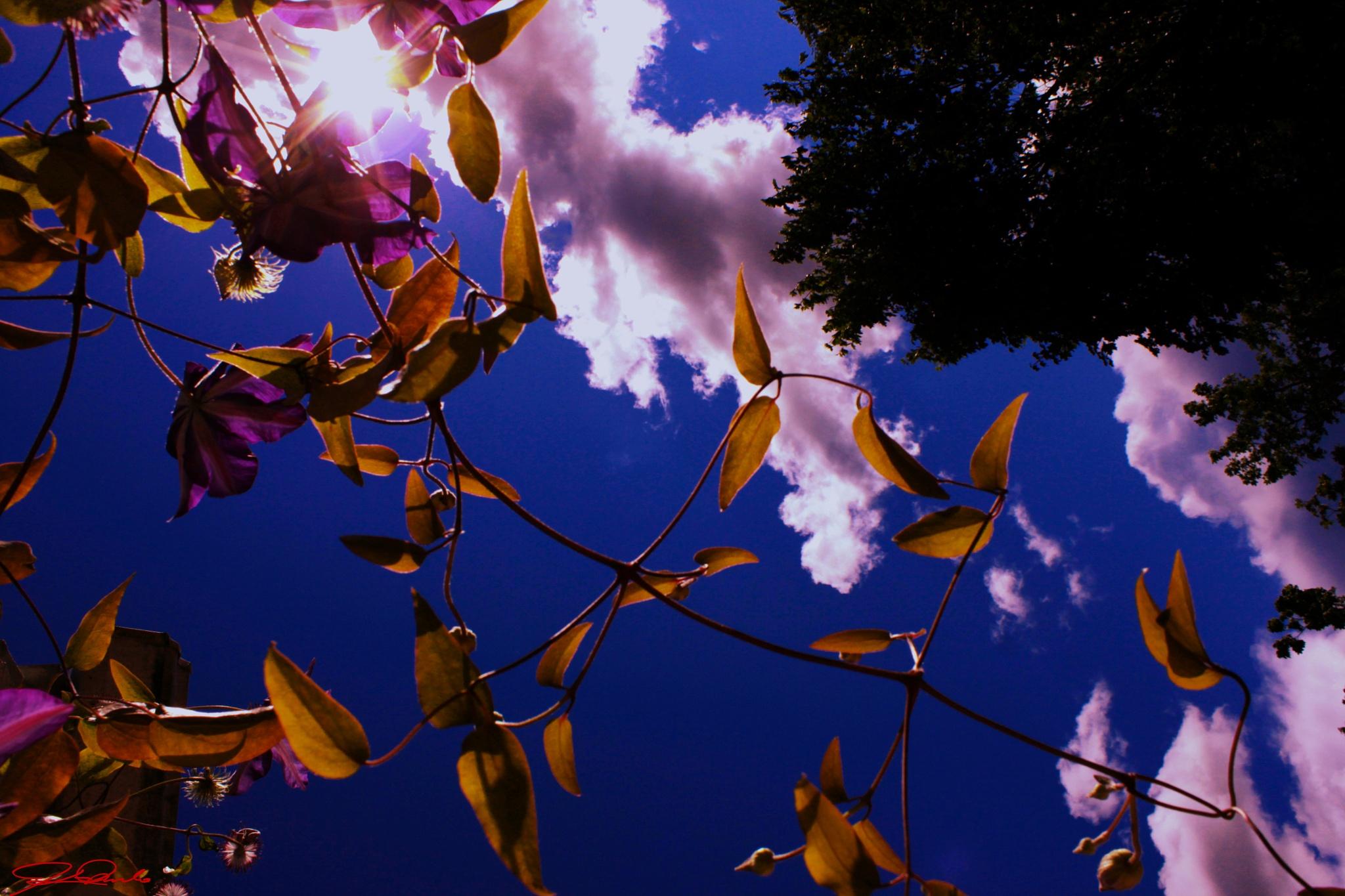Sunshine to your life by Kicka Terho