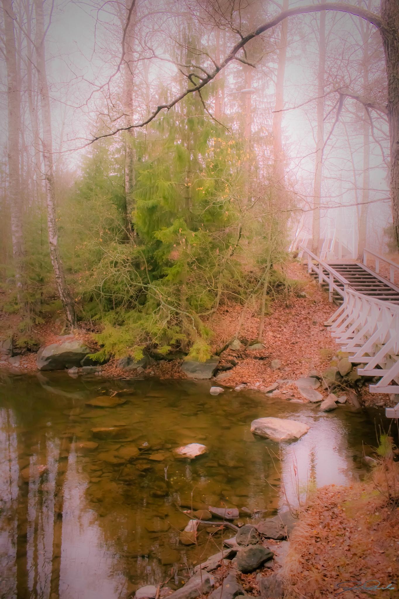 Trail through the fairy mist by Kicka Terho