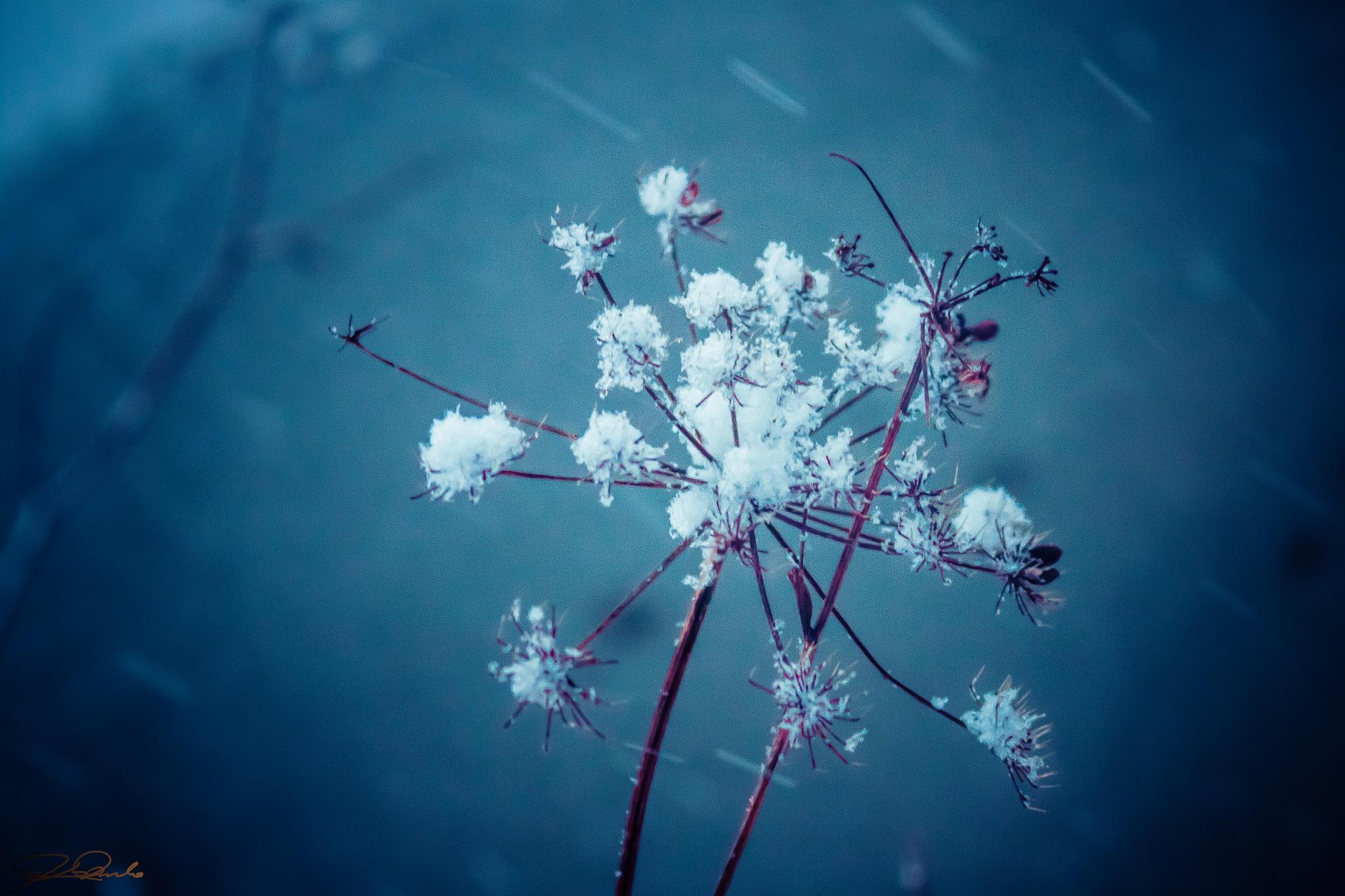 *Graced by Snow* by Kicka Terho