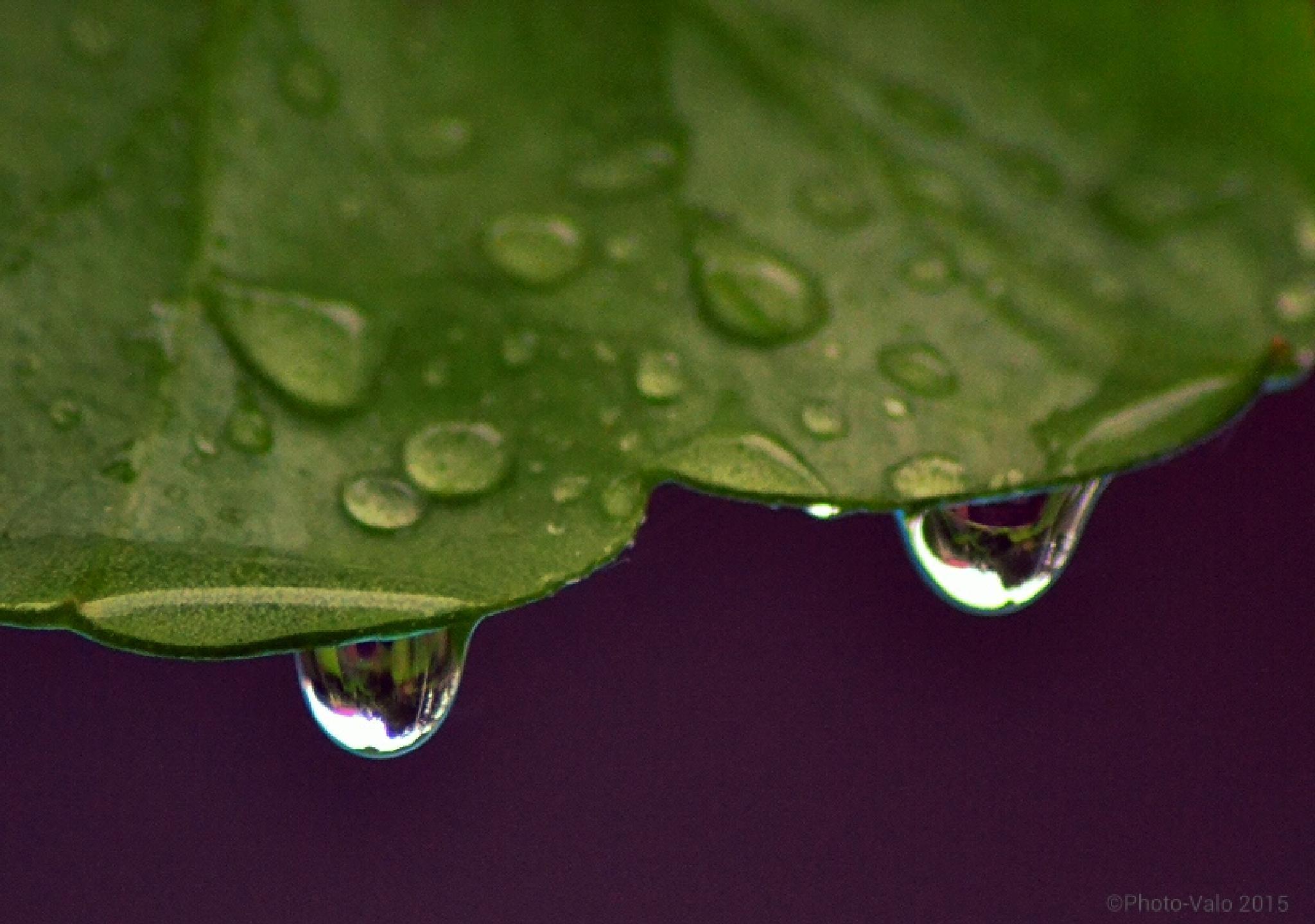 Raindrops by Timo V