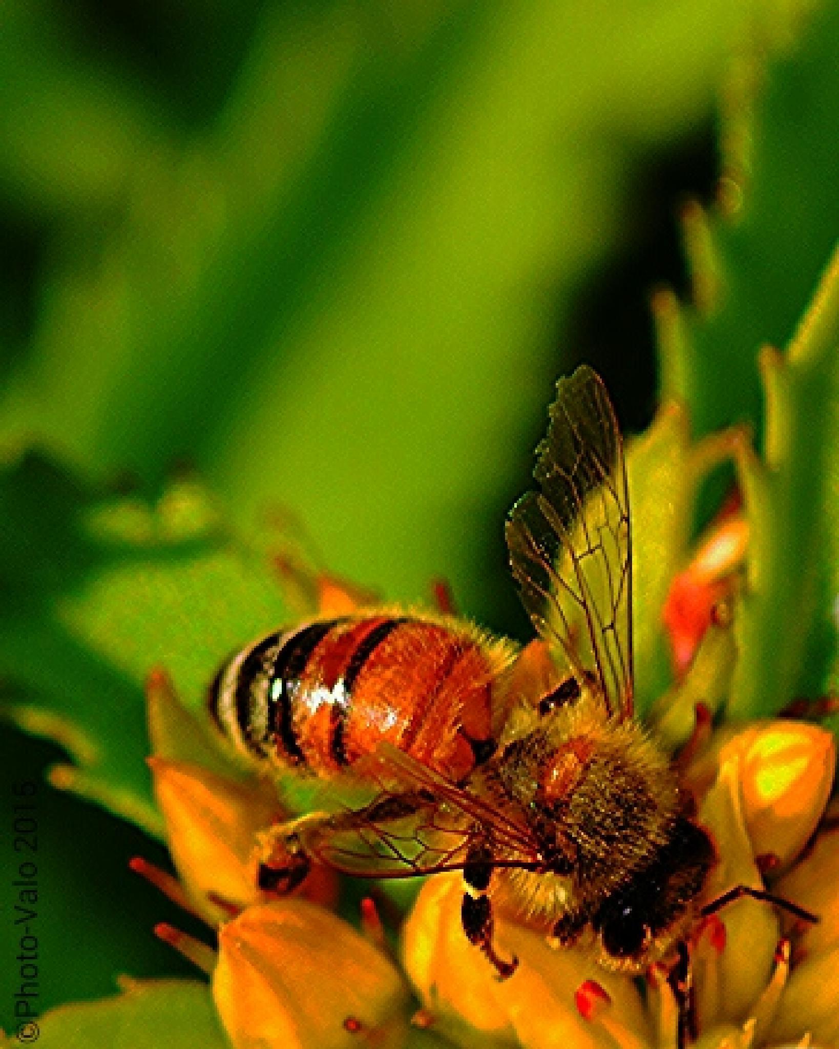Honey... by Timo V