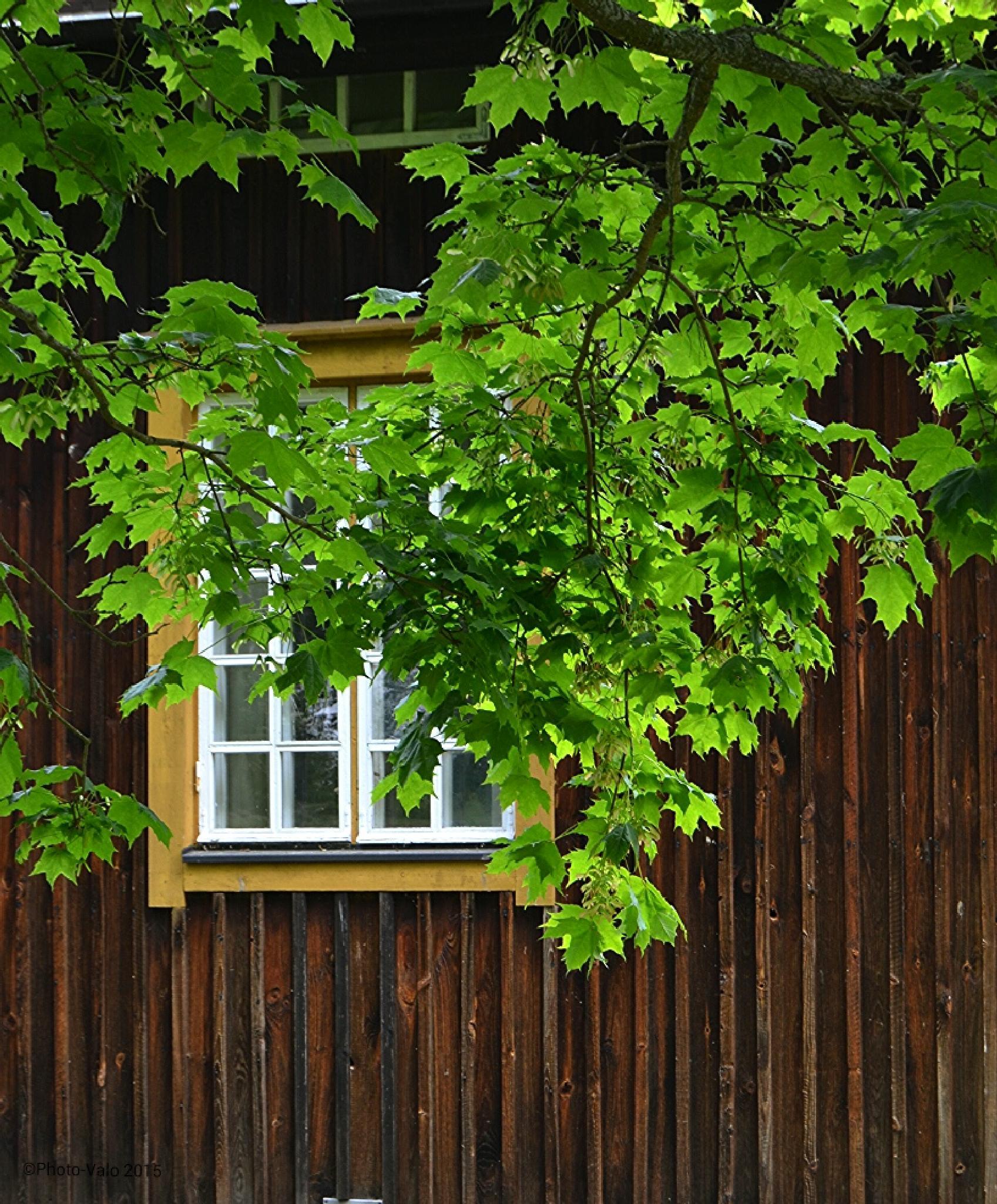 Bakerys window.. by Timo V