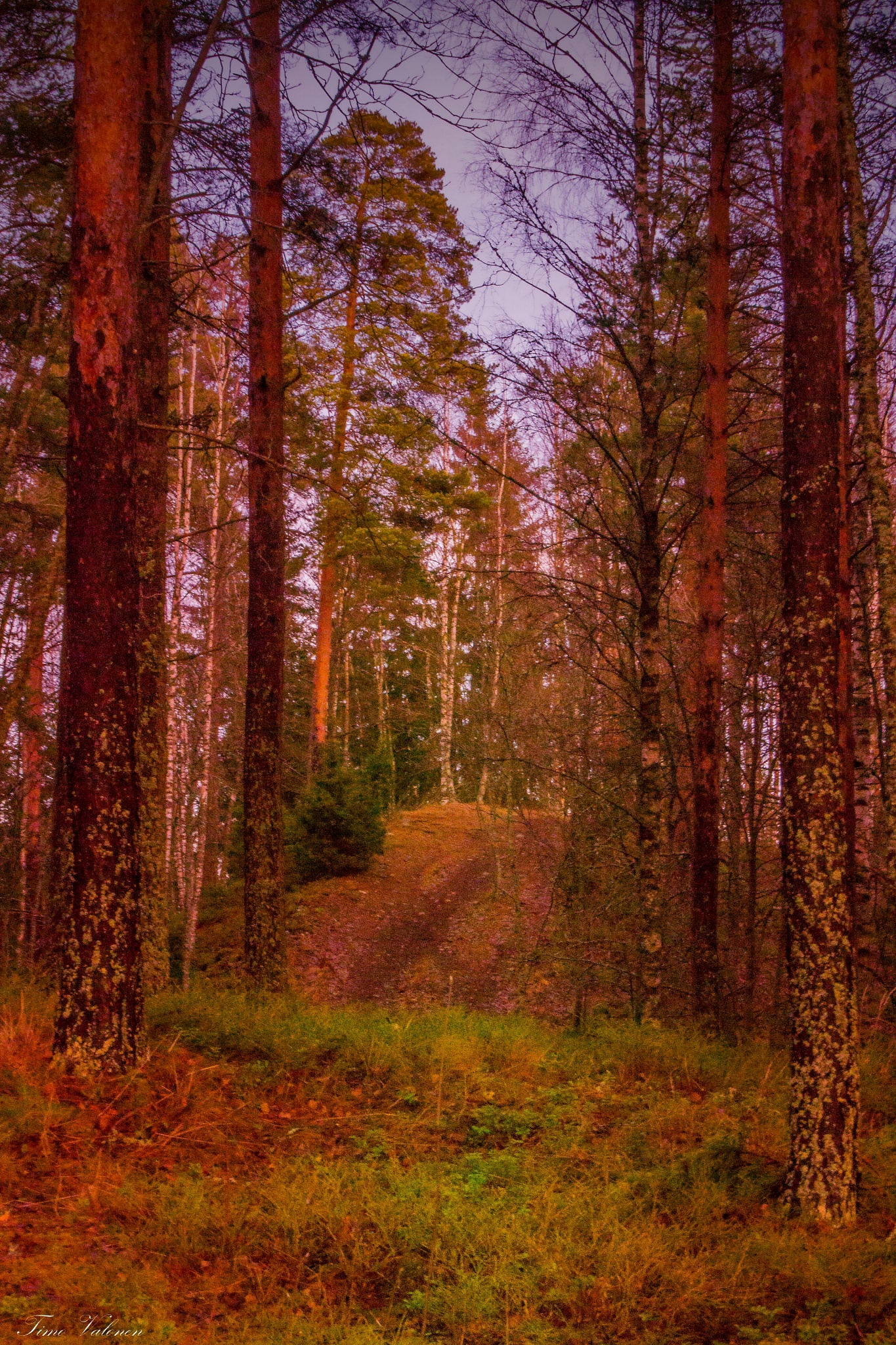 Forest path by Timo V
