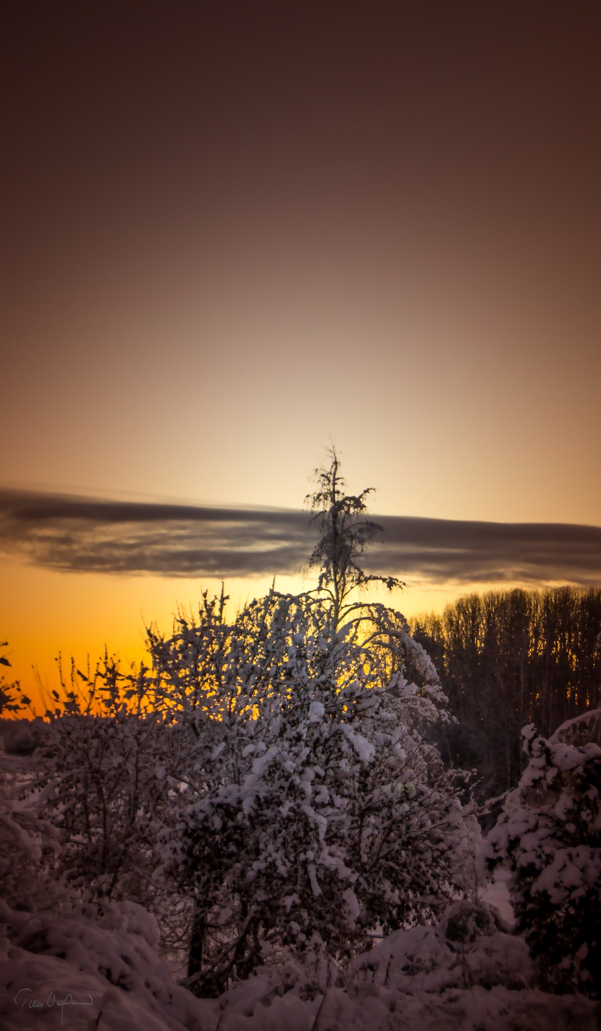 Untitled by Timo V