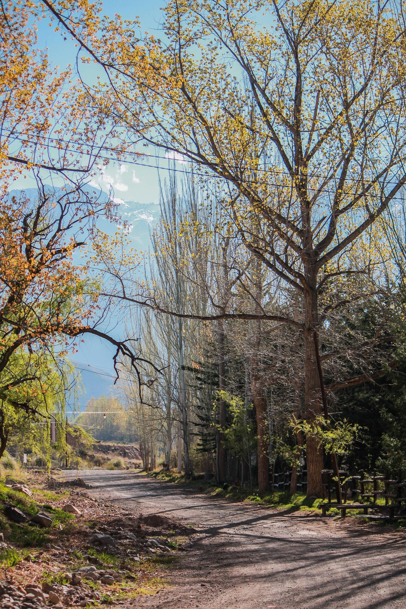 Autumn in Potrerillos * by JaveeDUva