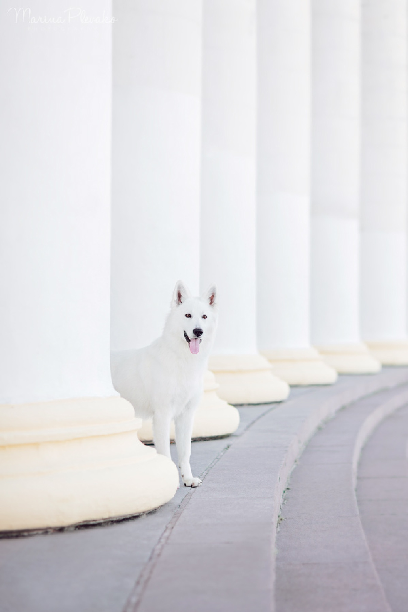 White on White by Marina Plevako
