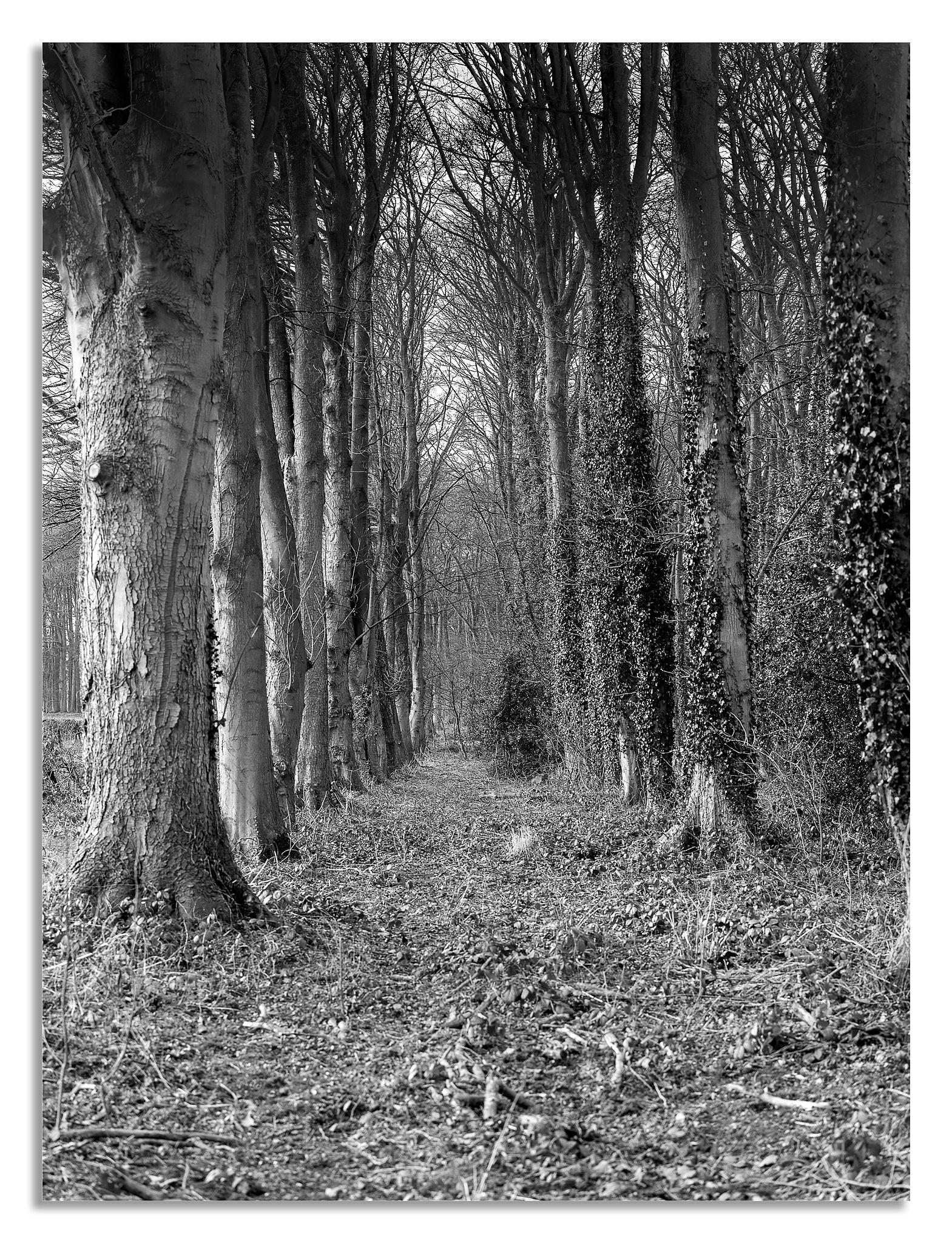 North Yorkshire Village walk 4 by johnhjic