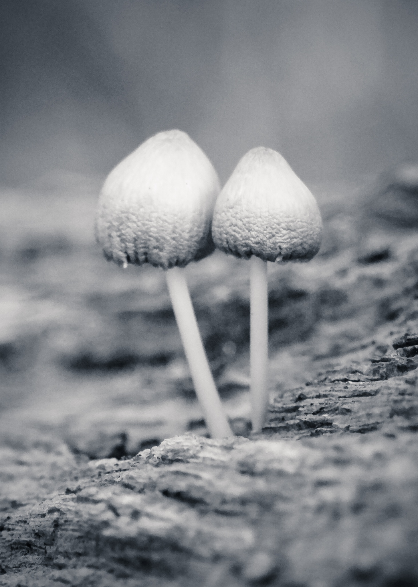 Couple by Mio Romanic