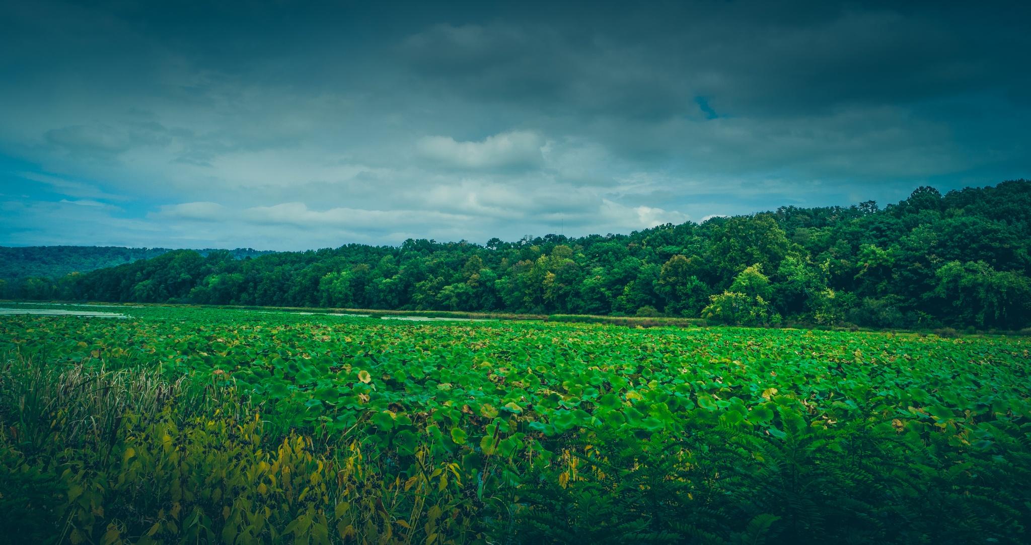 Wildwood Lake by Mio Romanic