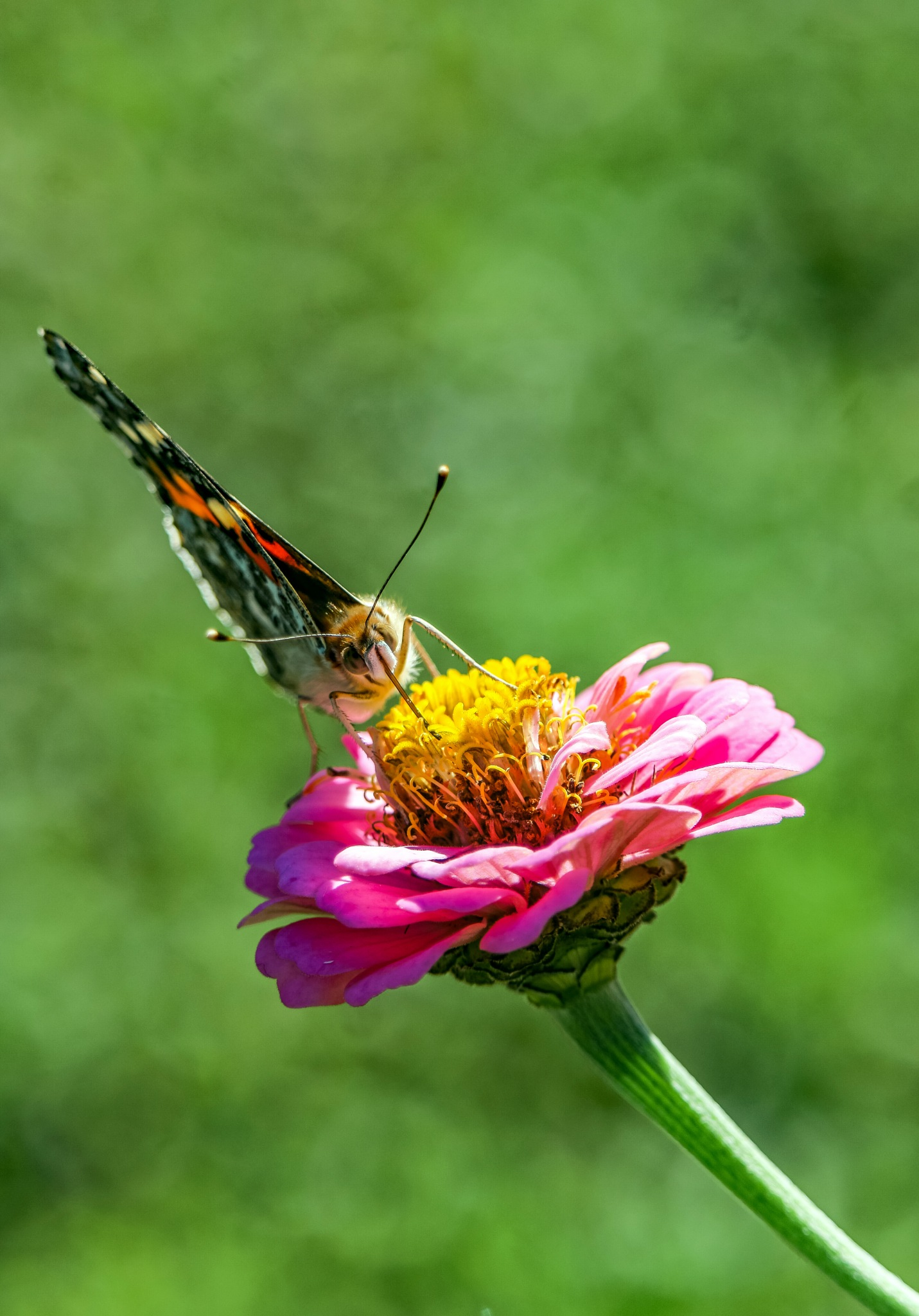 Butterfly by Mio Romanic