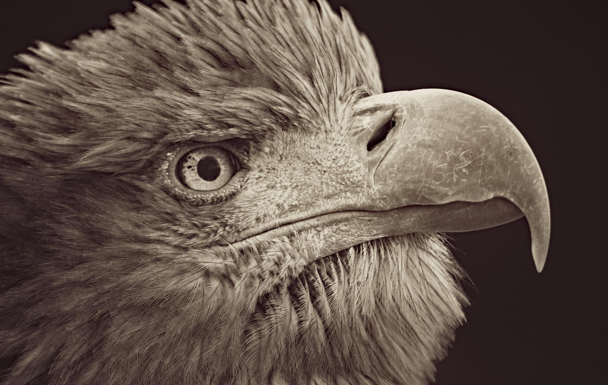 Eagle eye by Mio Romanic