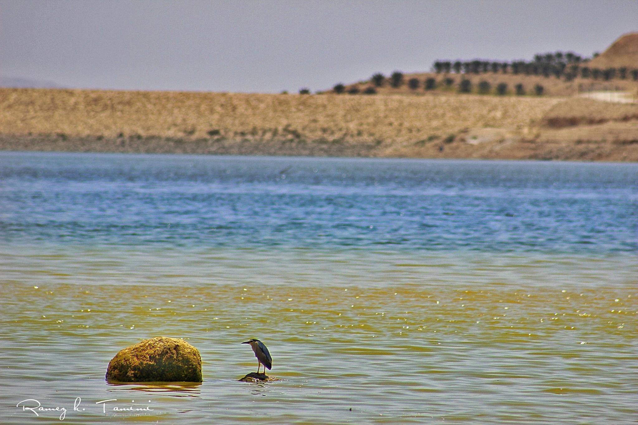Dam @jordan valley by Ramez k. Tamimi