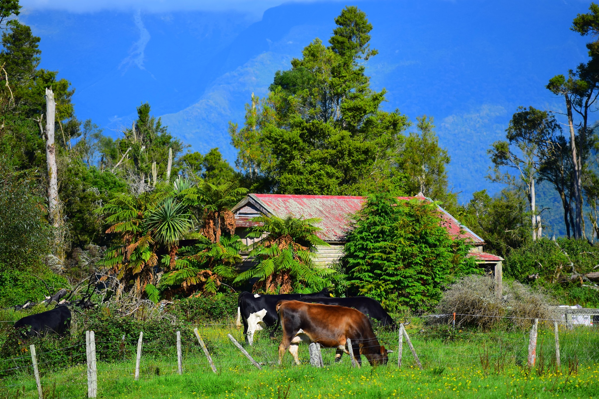 Wilderness farm by johndflatt