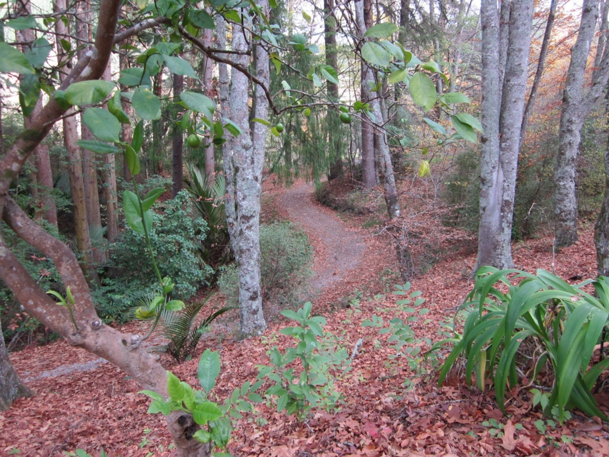 Woodland Path by johndflatt