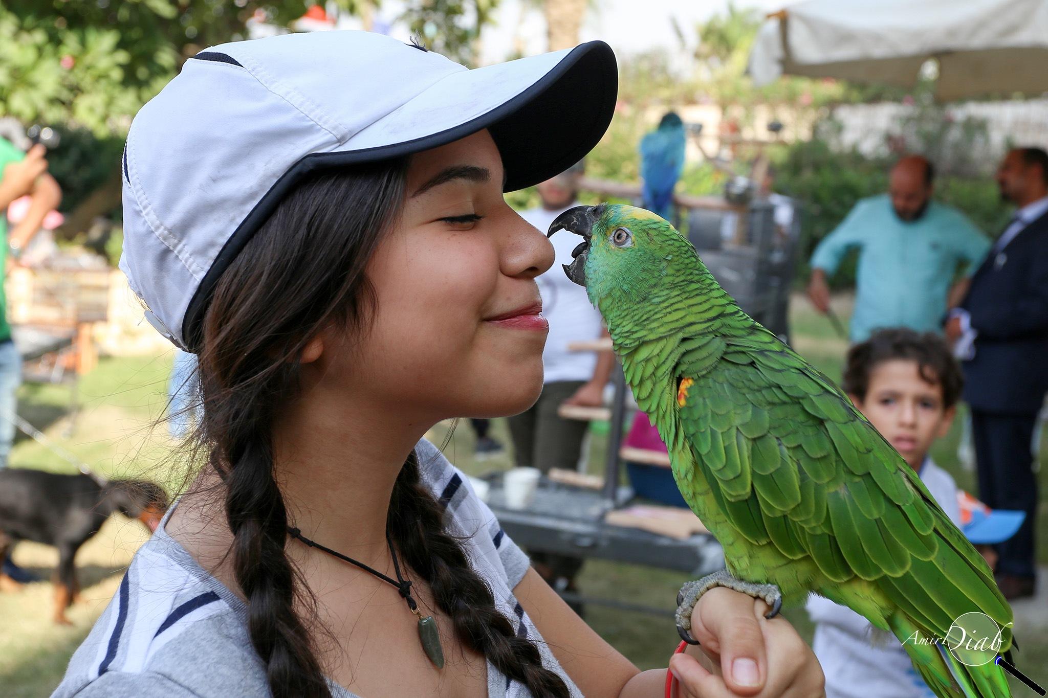 Parrote kiss by Amir Diab