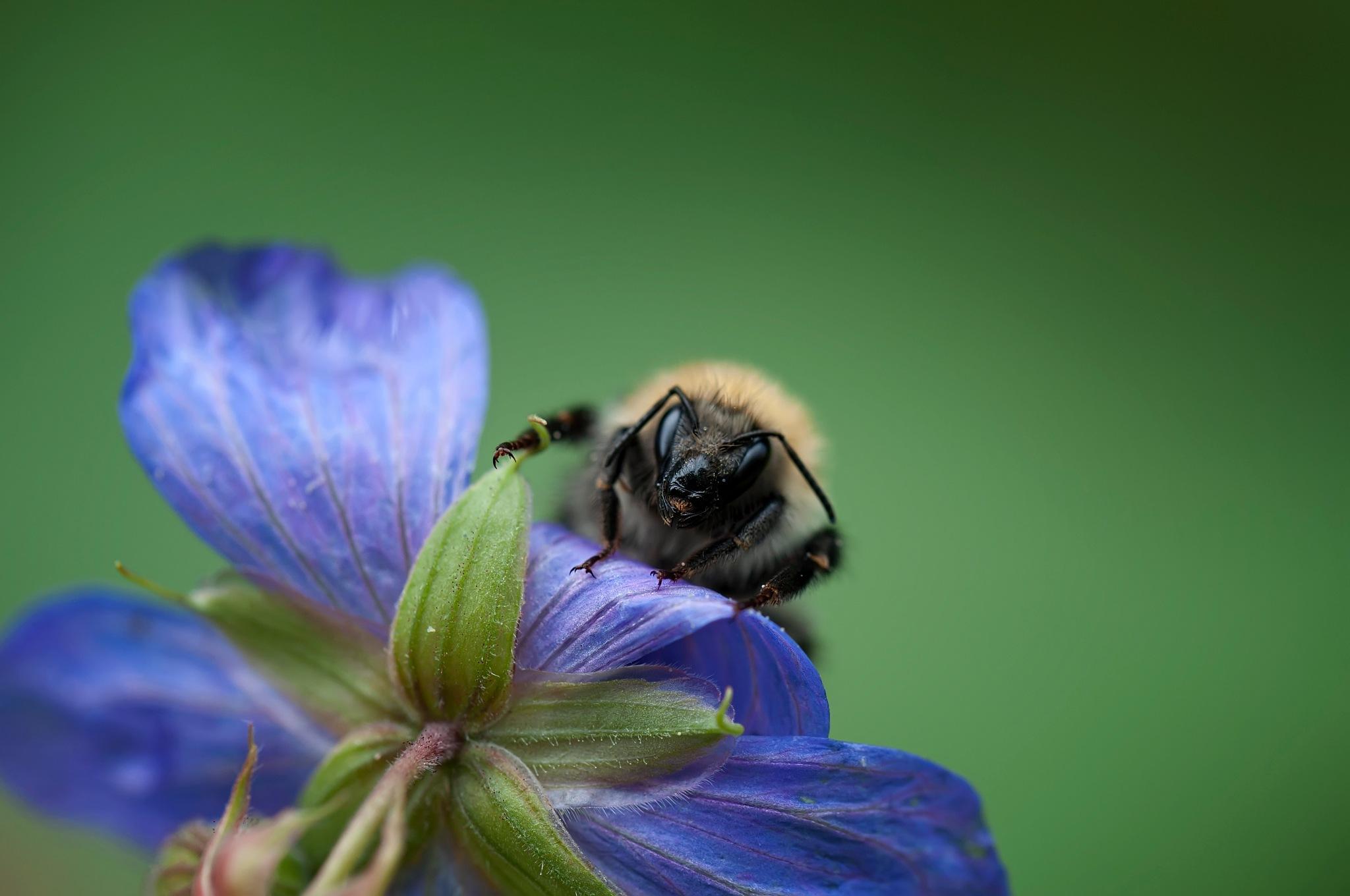 Bee... by Piskunov Igor