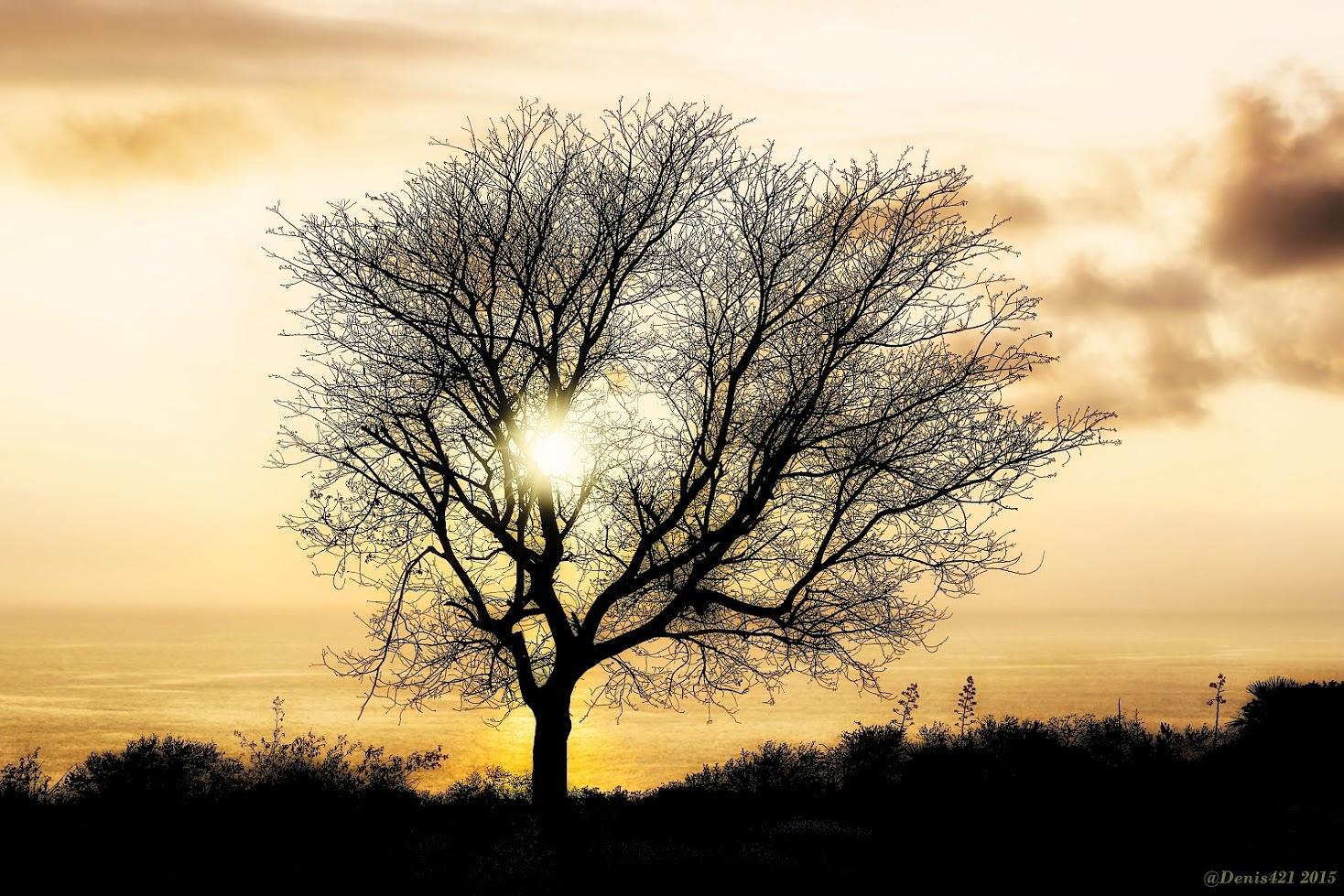 Sunlight thru a tree by Denis Payet