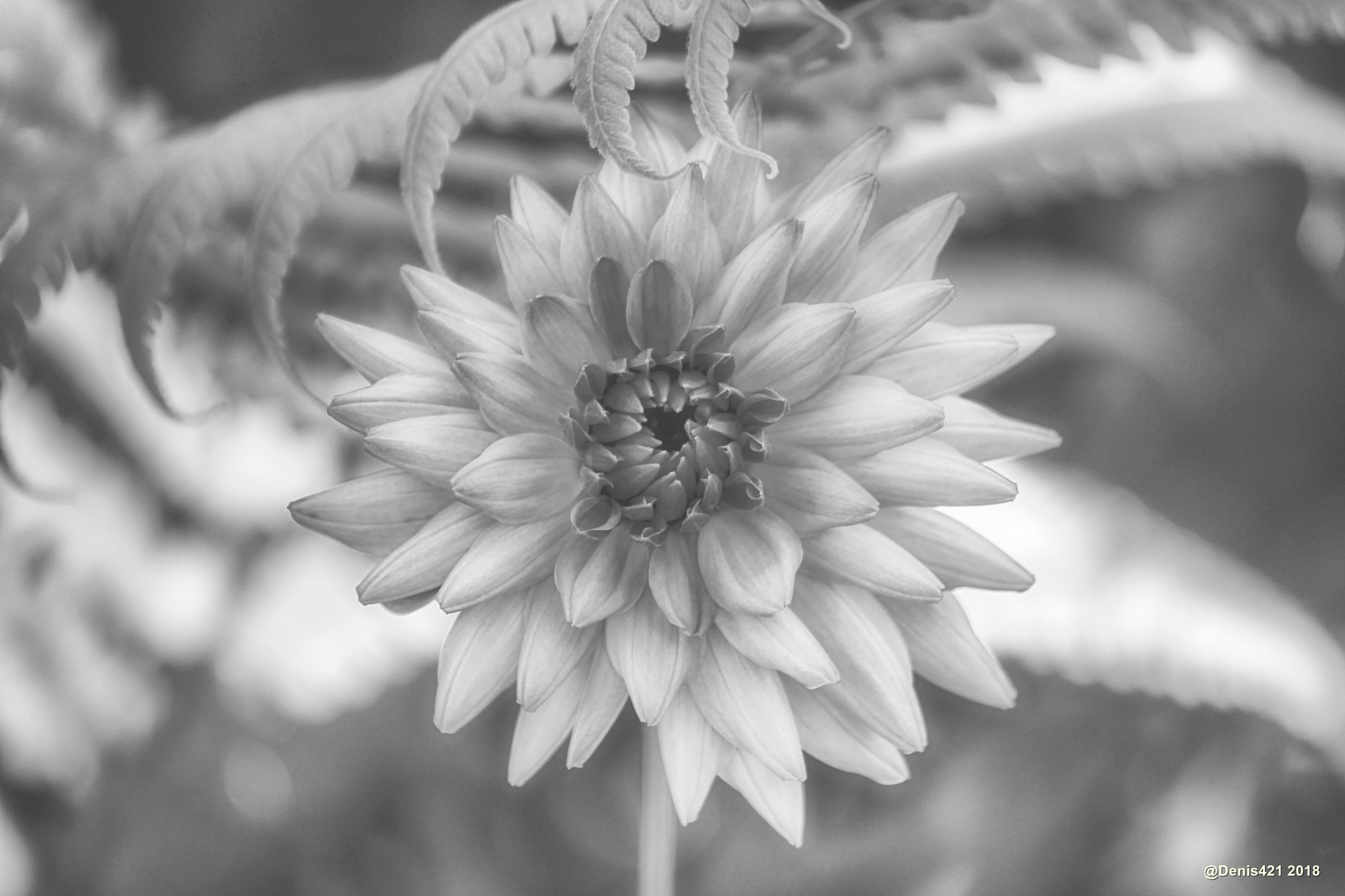 Flower by Denis Payet