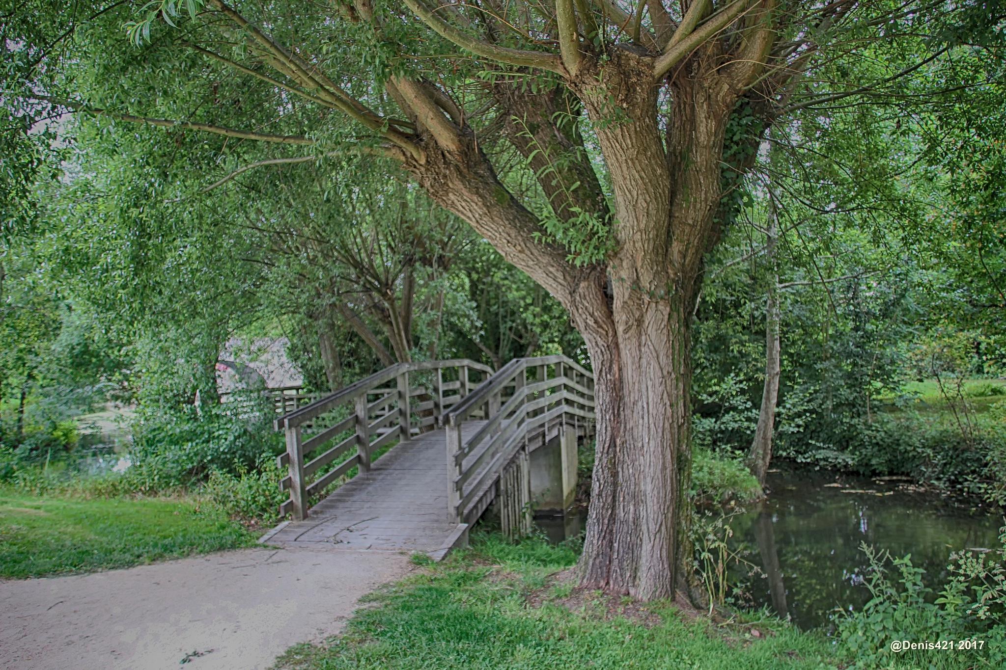 Walk in a park in Niort by Denis Payet