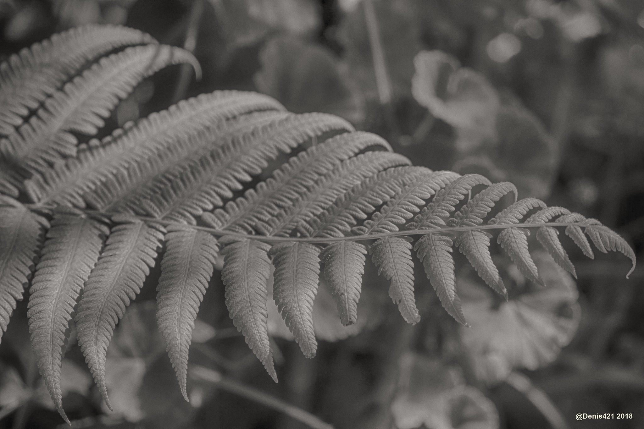Fern leaf by Denis Payet