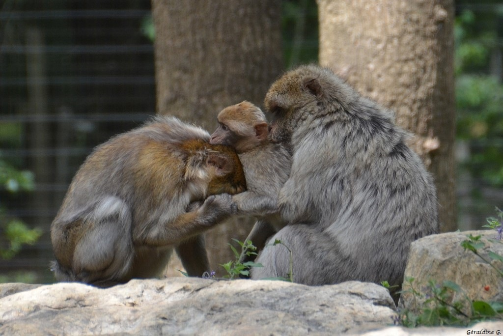 singes by eauderose