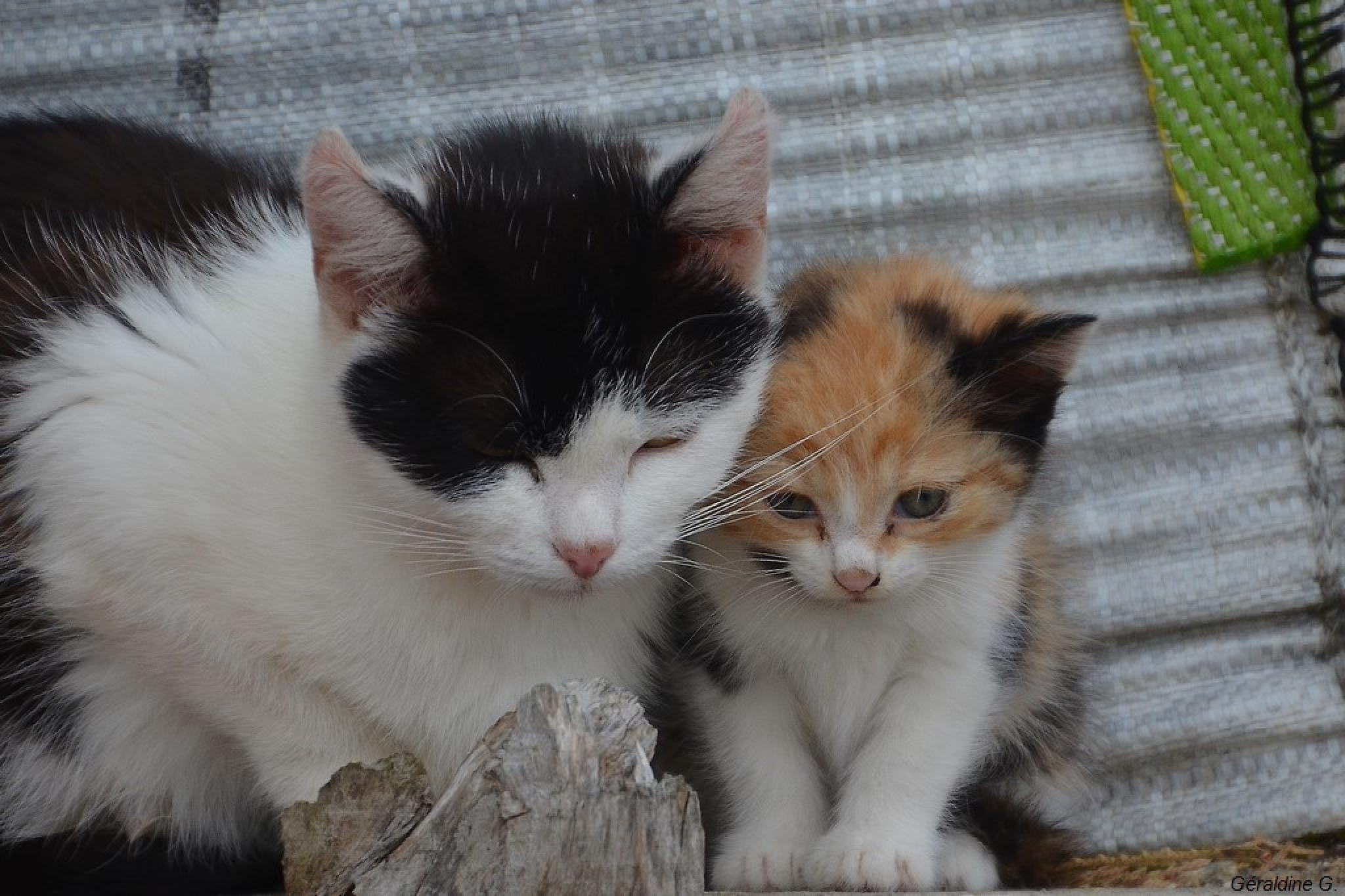mère et fille by eauderose