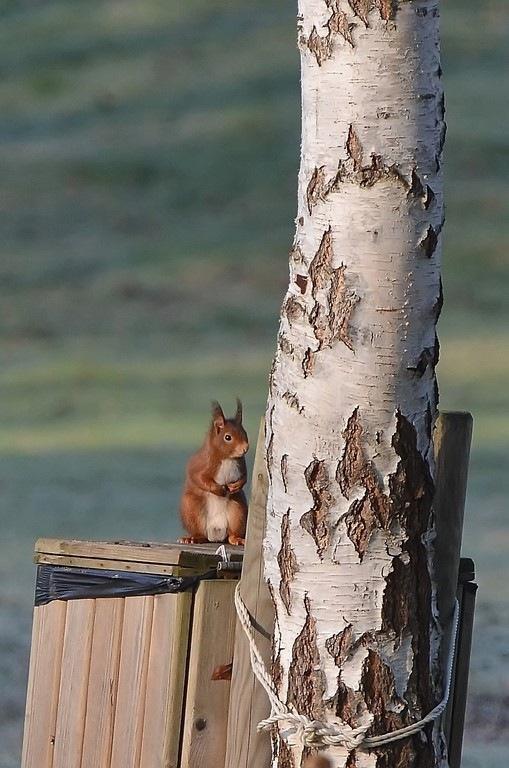 encore une surprise hier après mon 1 er écureuil j'en ai surpris un autre sur cette poubelle by eauderose