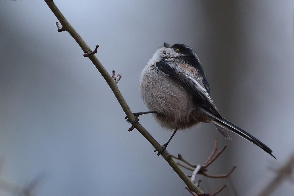 Photo in Animal #animals #birds #nikon #nature