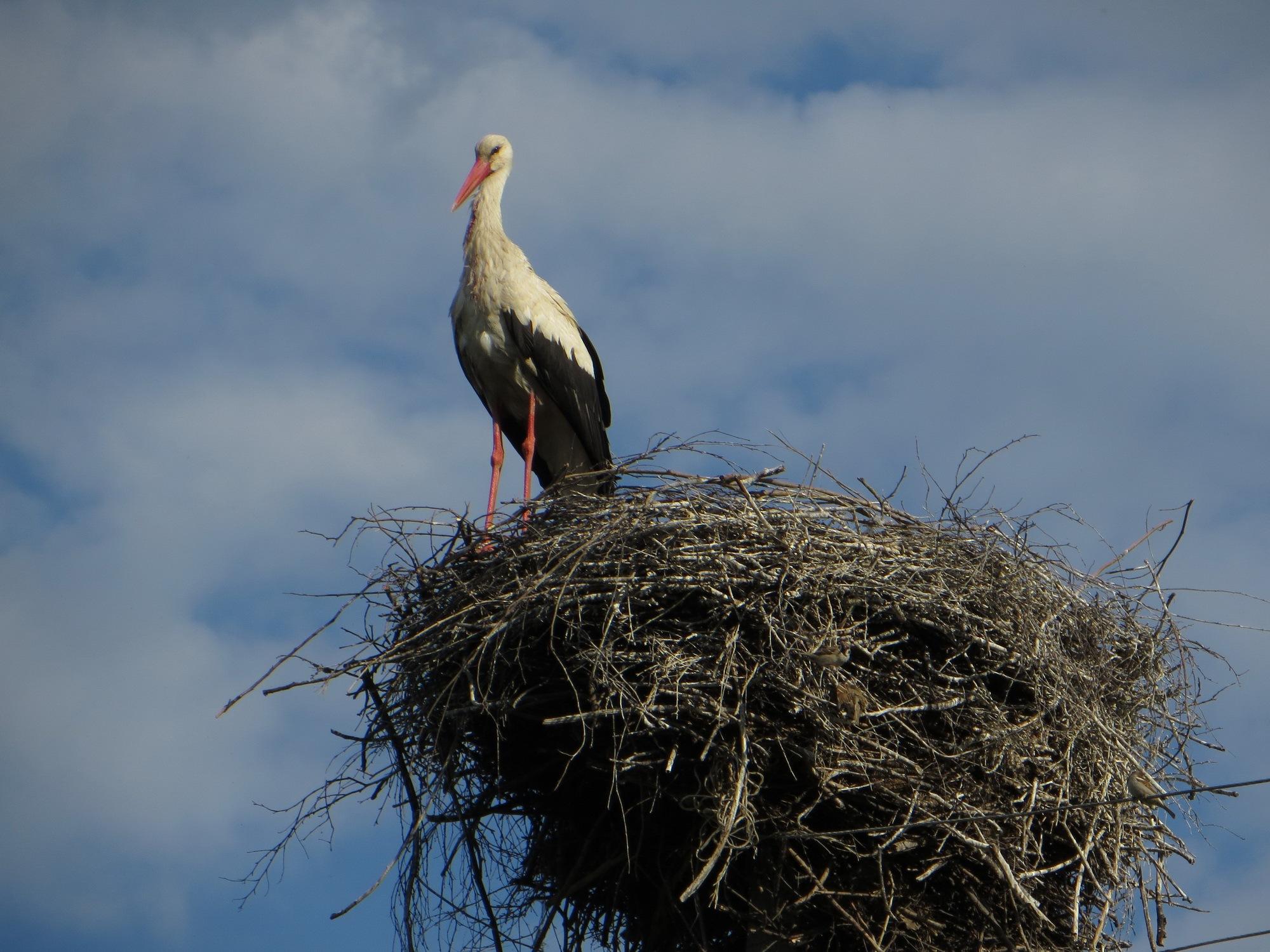 Stork by Yurkoff Wladimir
