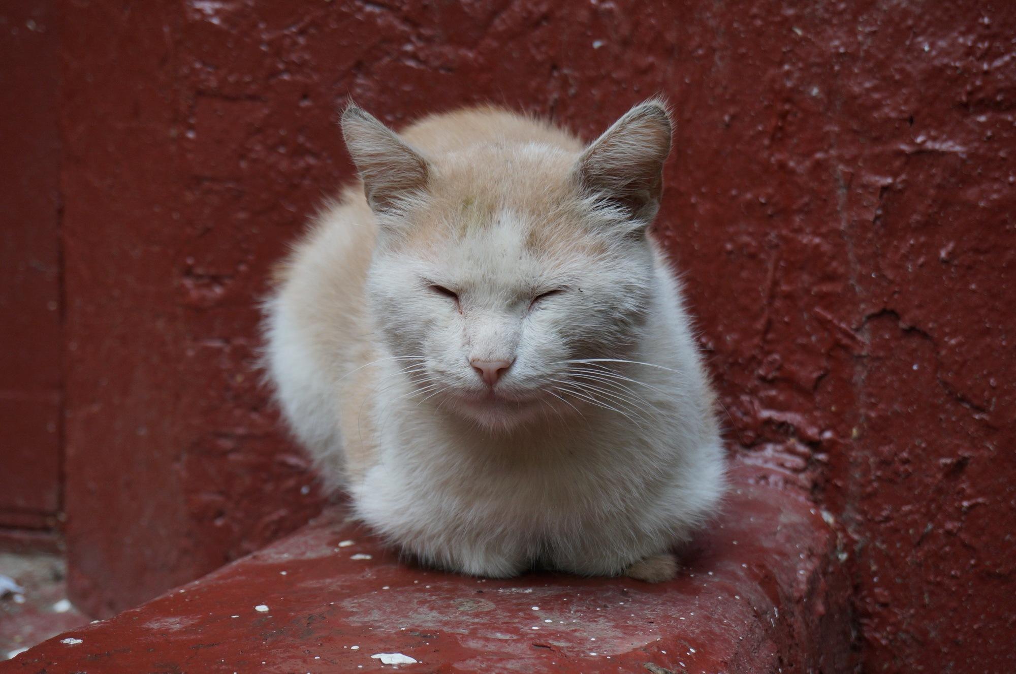 International Cat Day by Yurkoff Wladimir