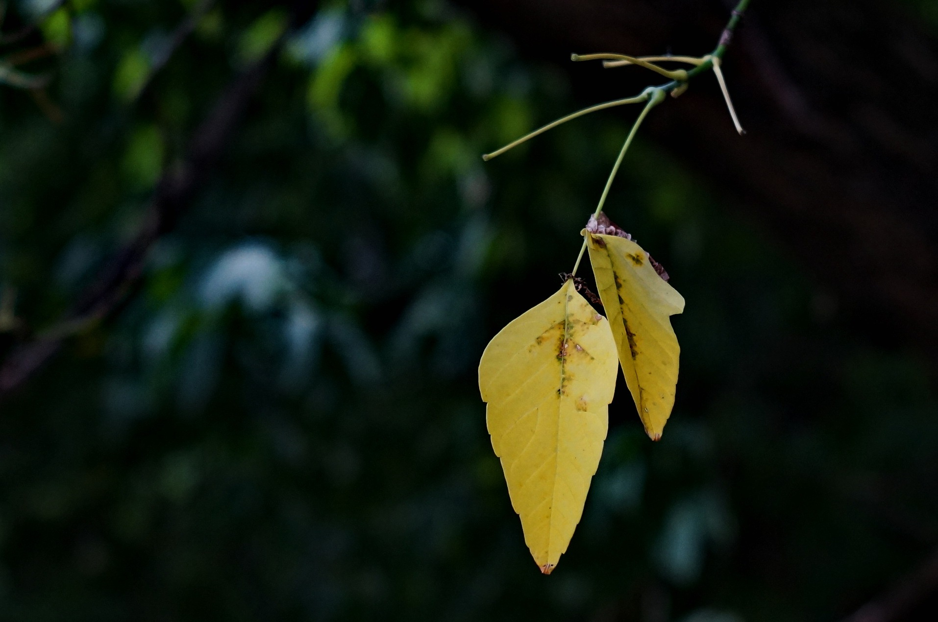 Yellow Ticket of Autumn by Yurkoff Wladimir