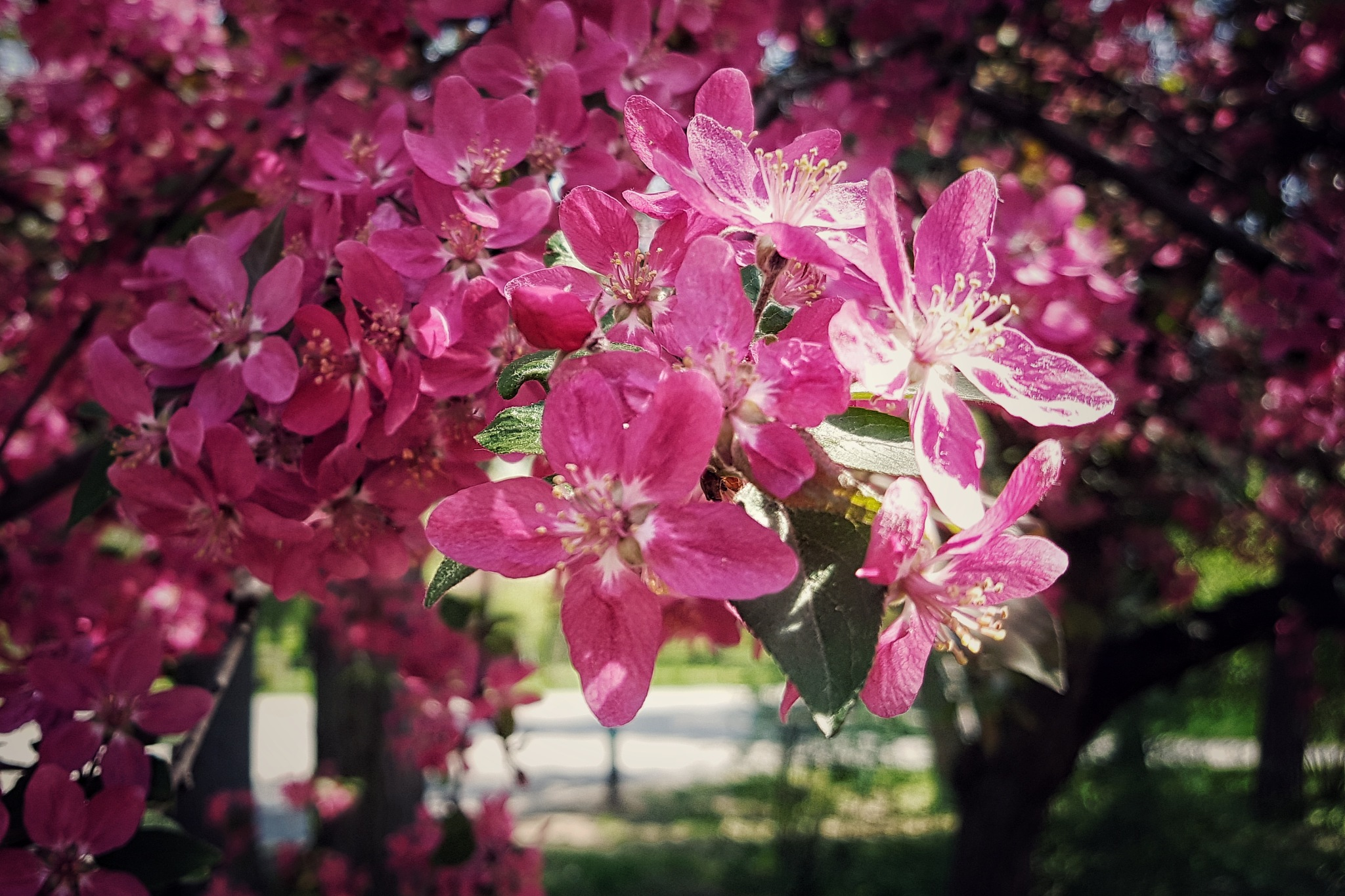 Color of spring by Costin0509