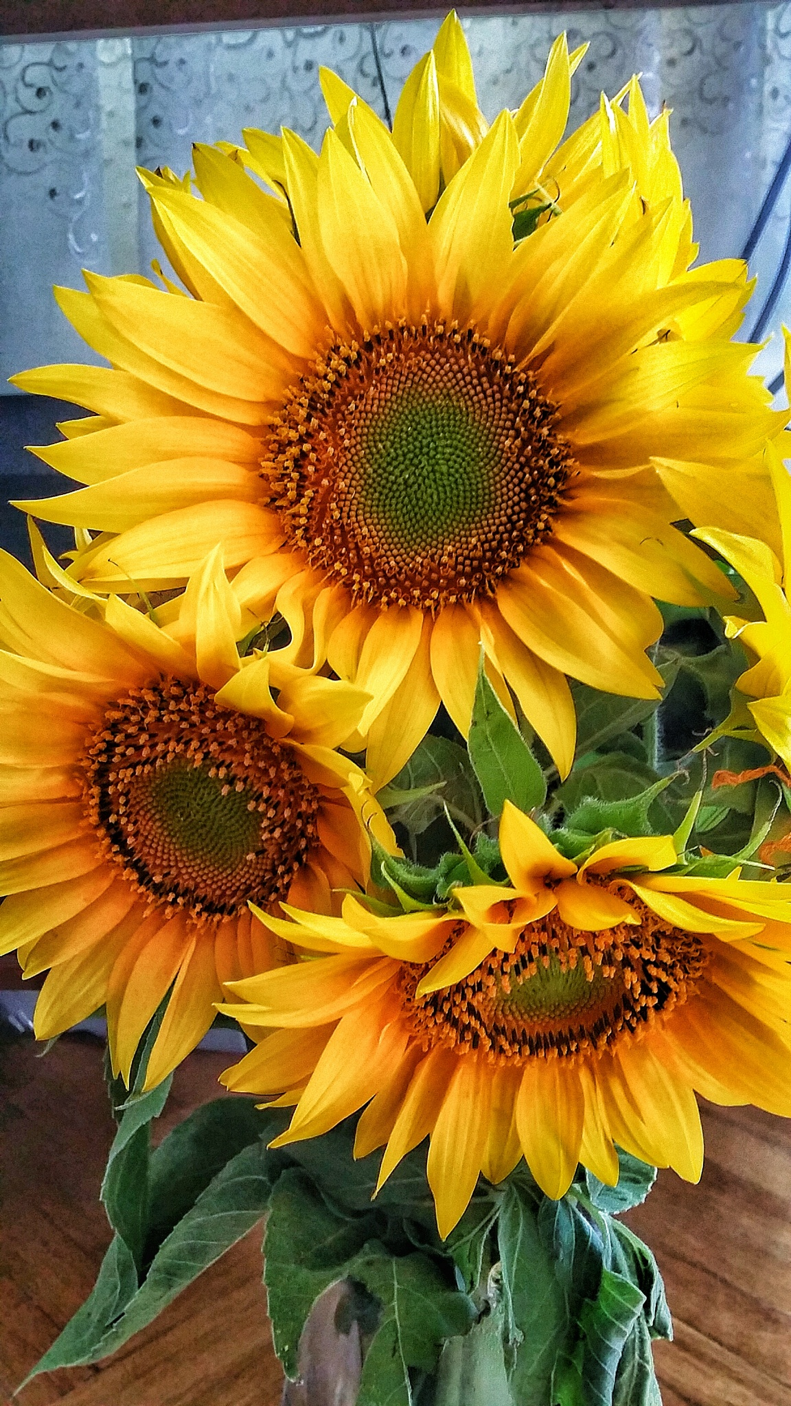 Sunflower 2 by Costin0509