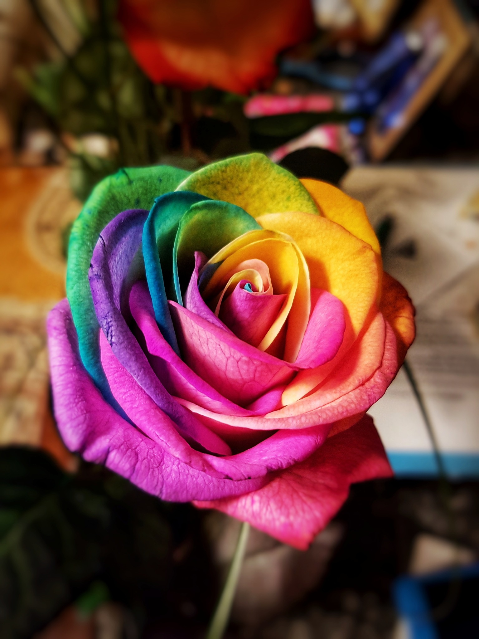 Multicolour by Costin0509