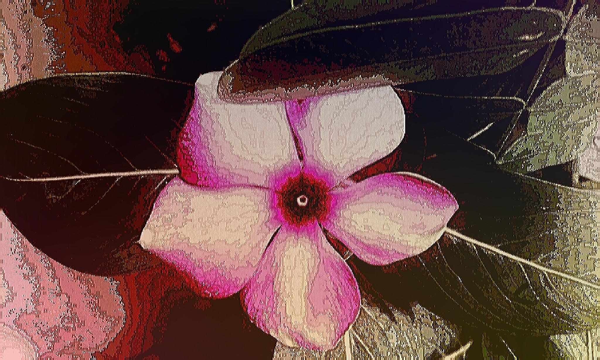 Photo in Random #garden #flower #pink #periwinkle #india #upic. #com