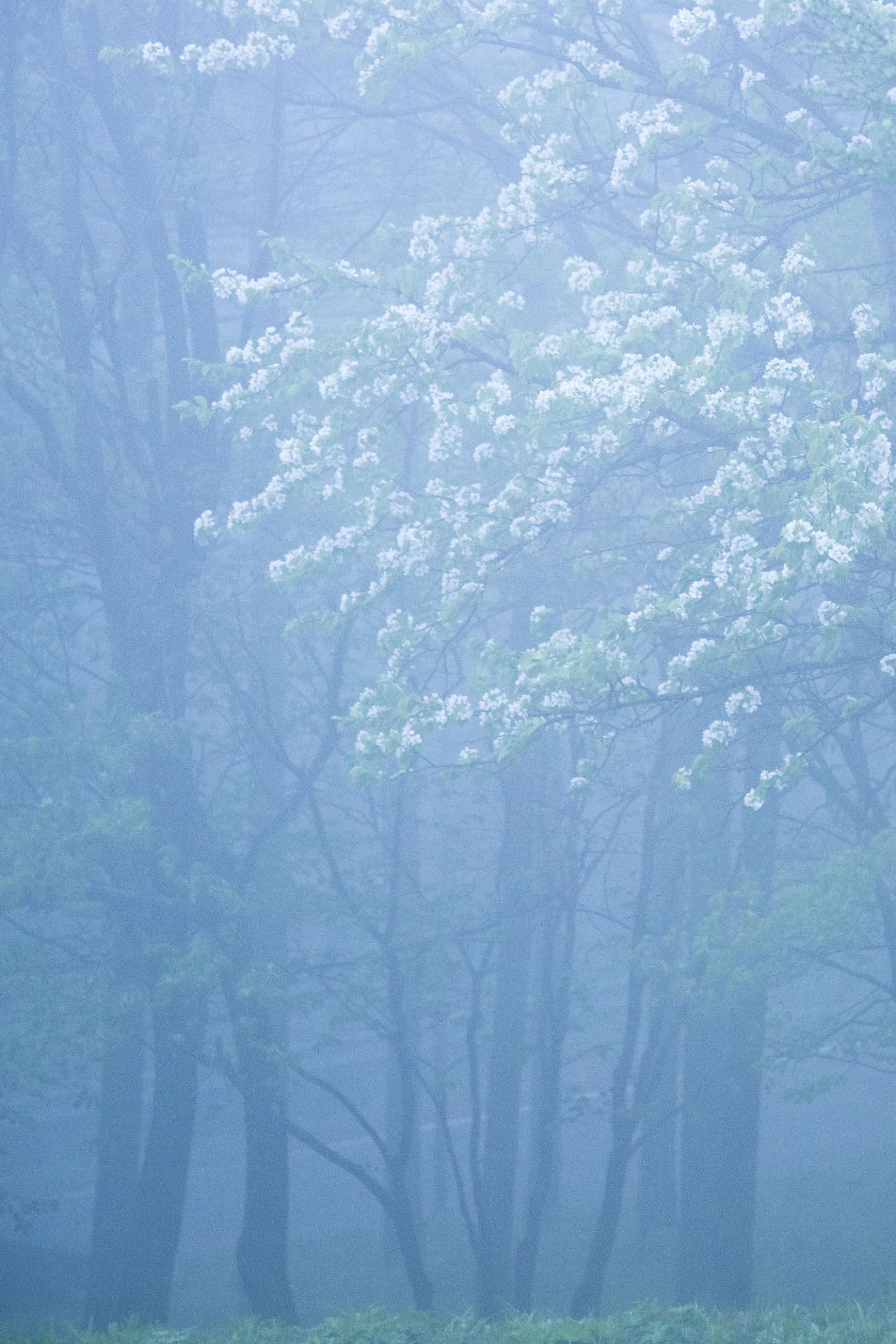 Trees in the mist by sjin4747