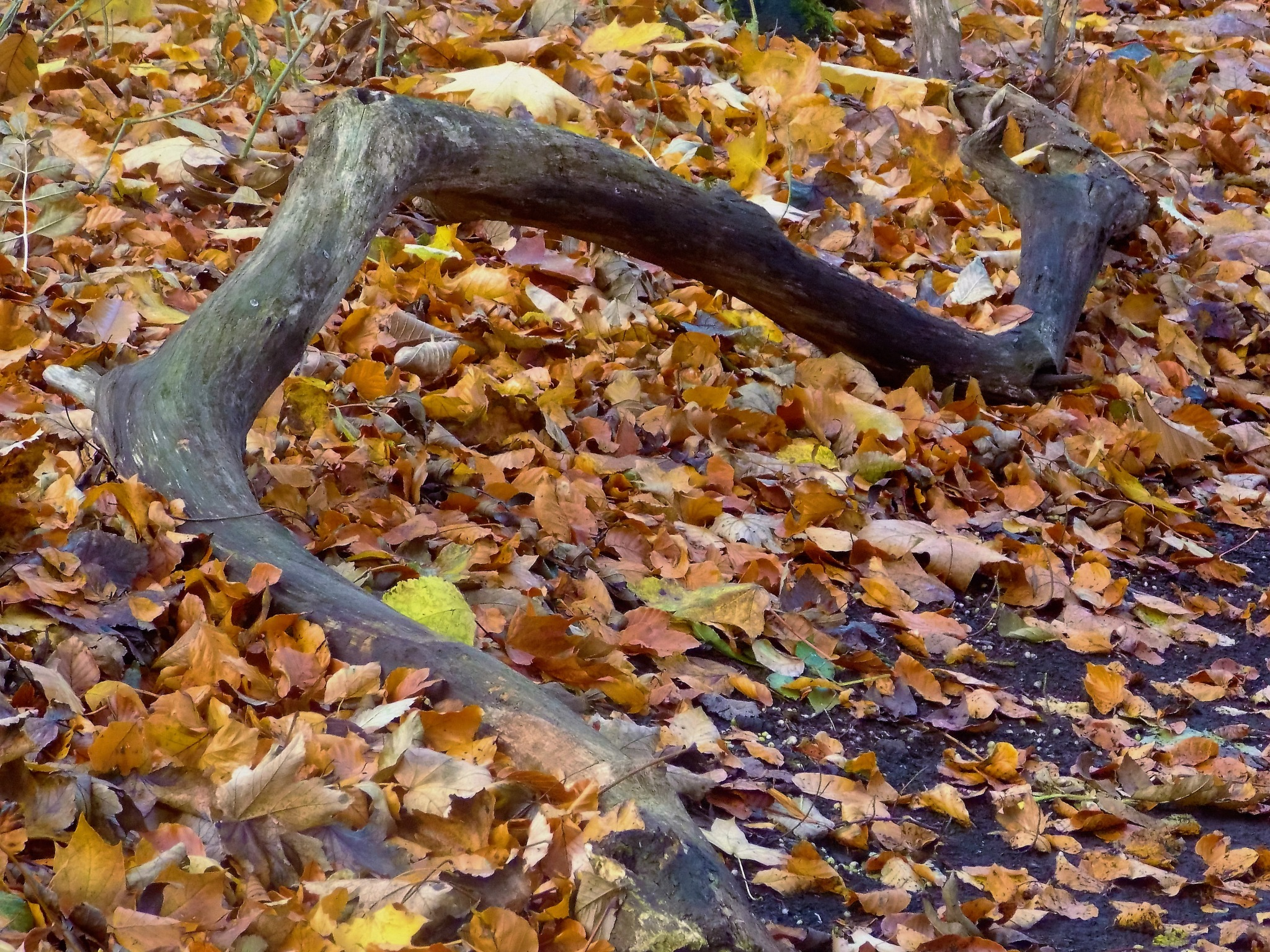 """""""Twisted Log"""" by Thania Wehmeyer"""
