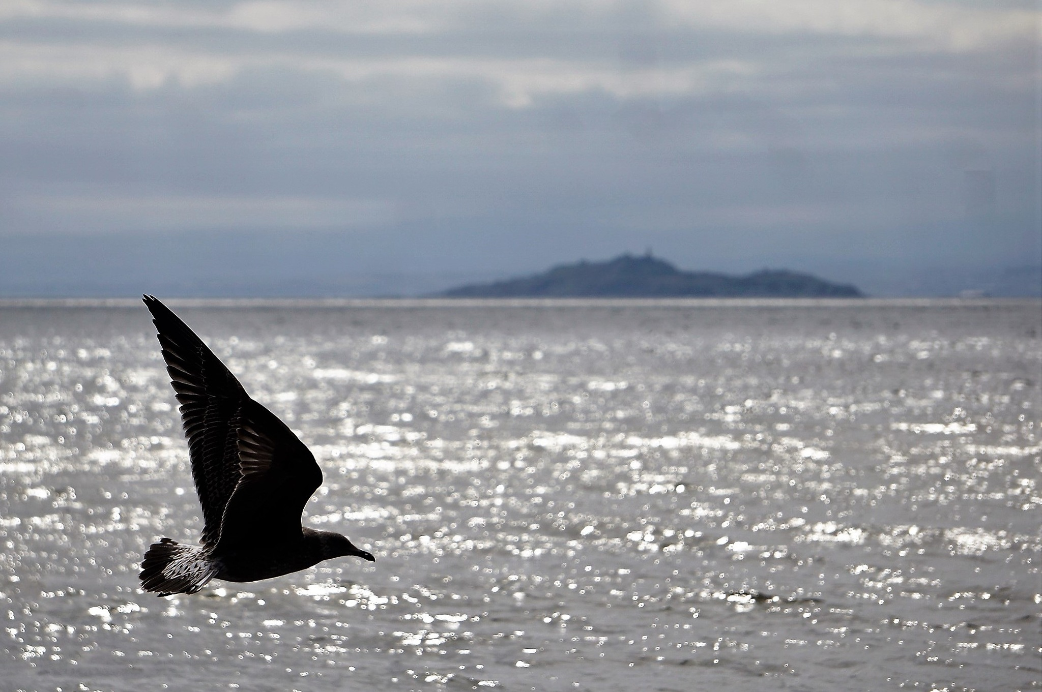 """Gull Flight"" by Thania Wehmeyer"